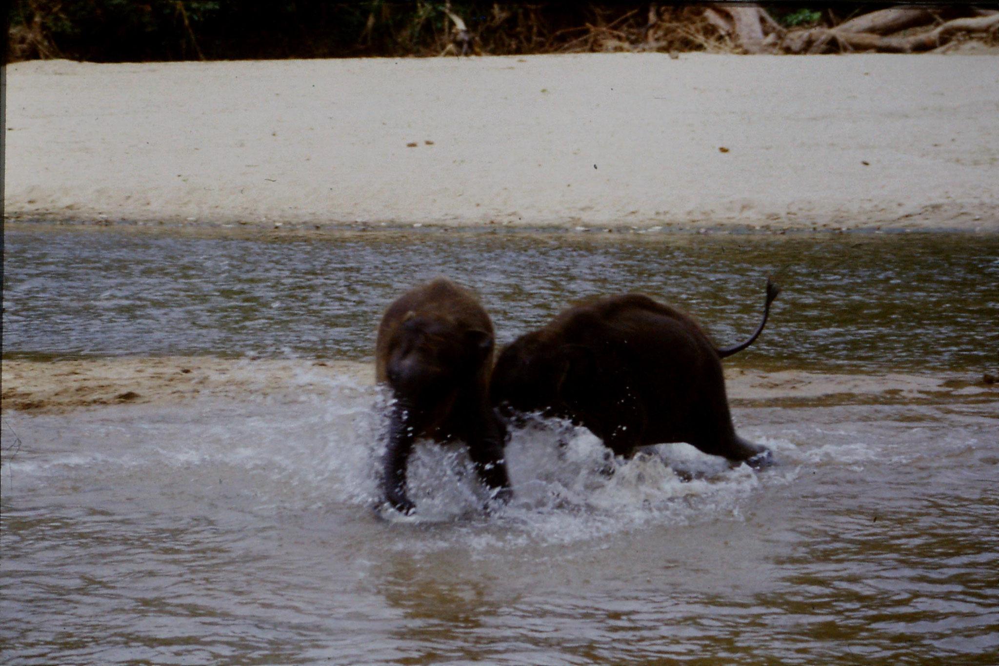 10/2/1990: 15: Kegalla elephant orphanage