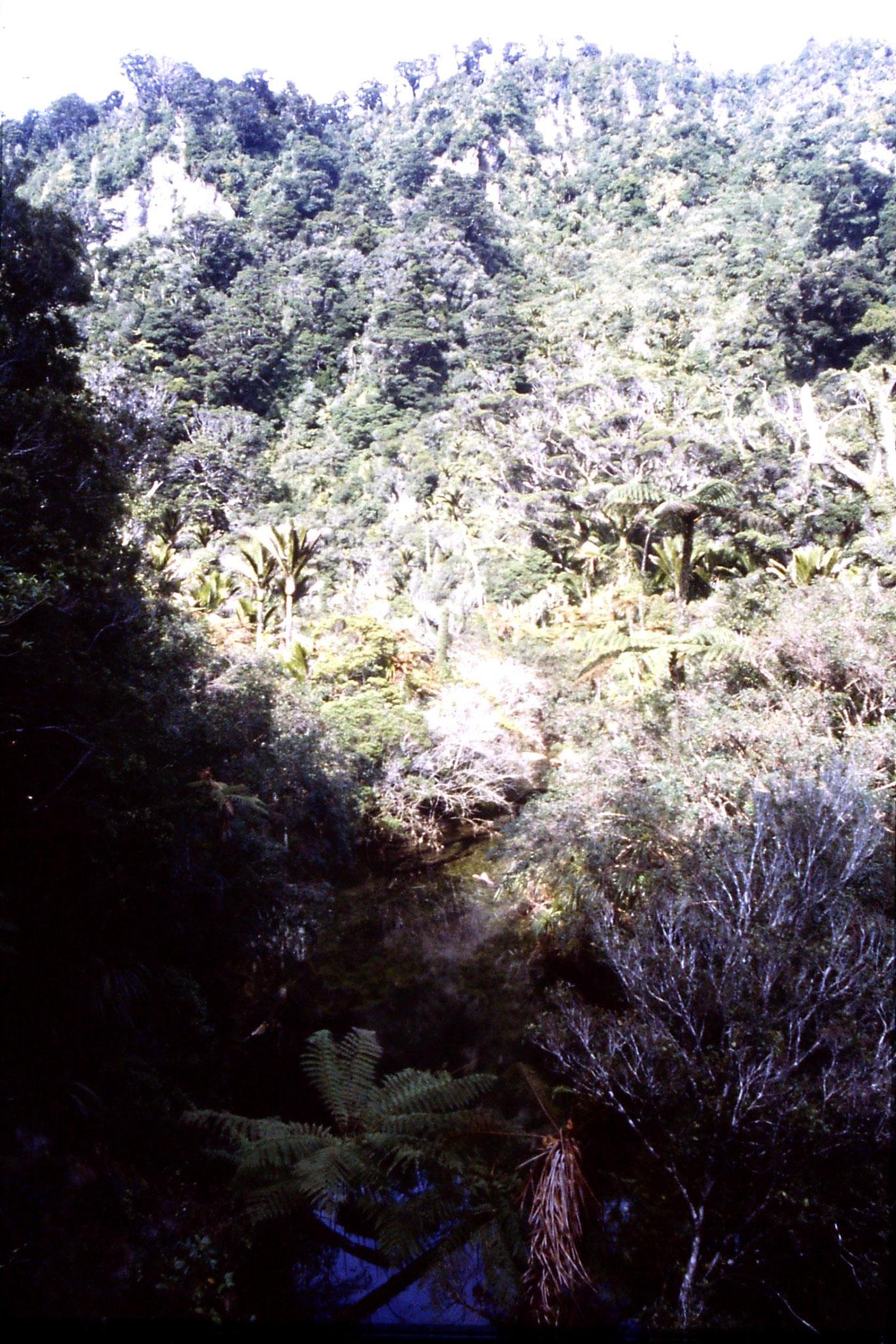 23/8/1990: 5: Bullock Creek