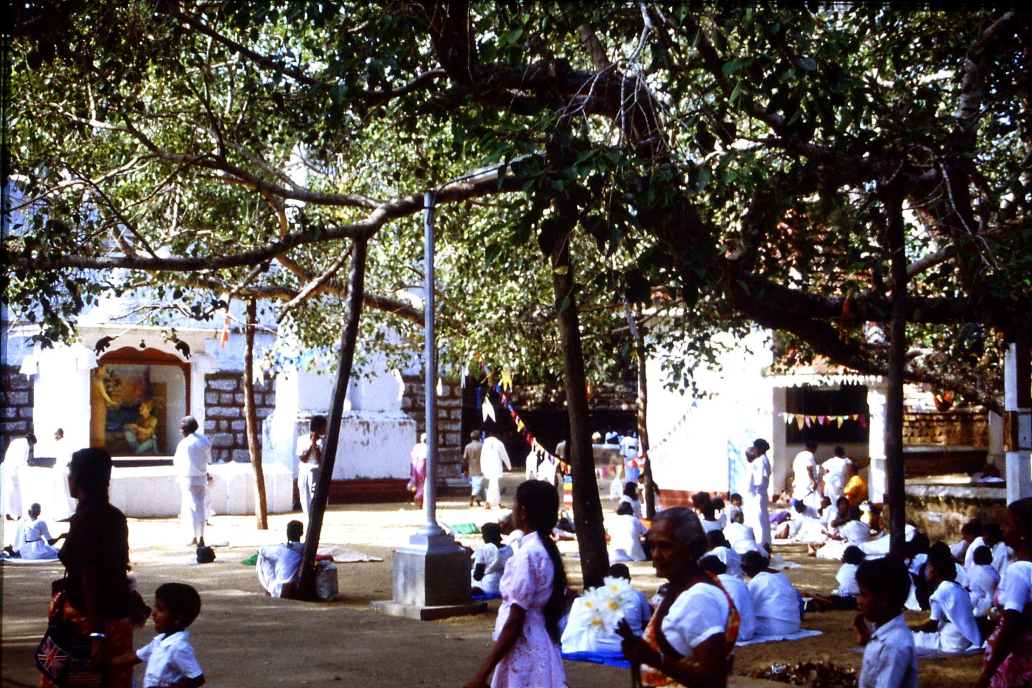 103/7: 9/2/1990 Anuradhapura pilgrims under Bo tree