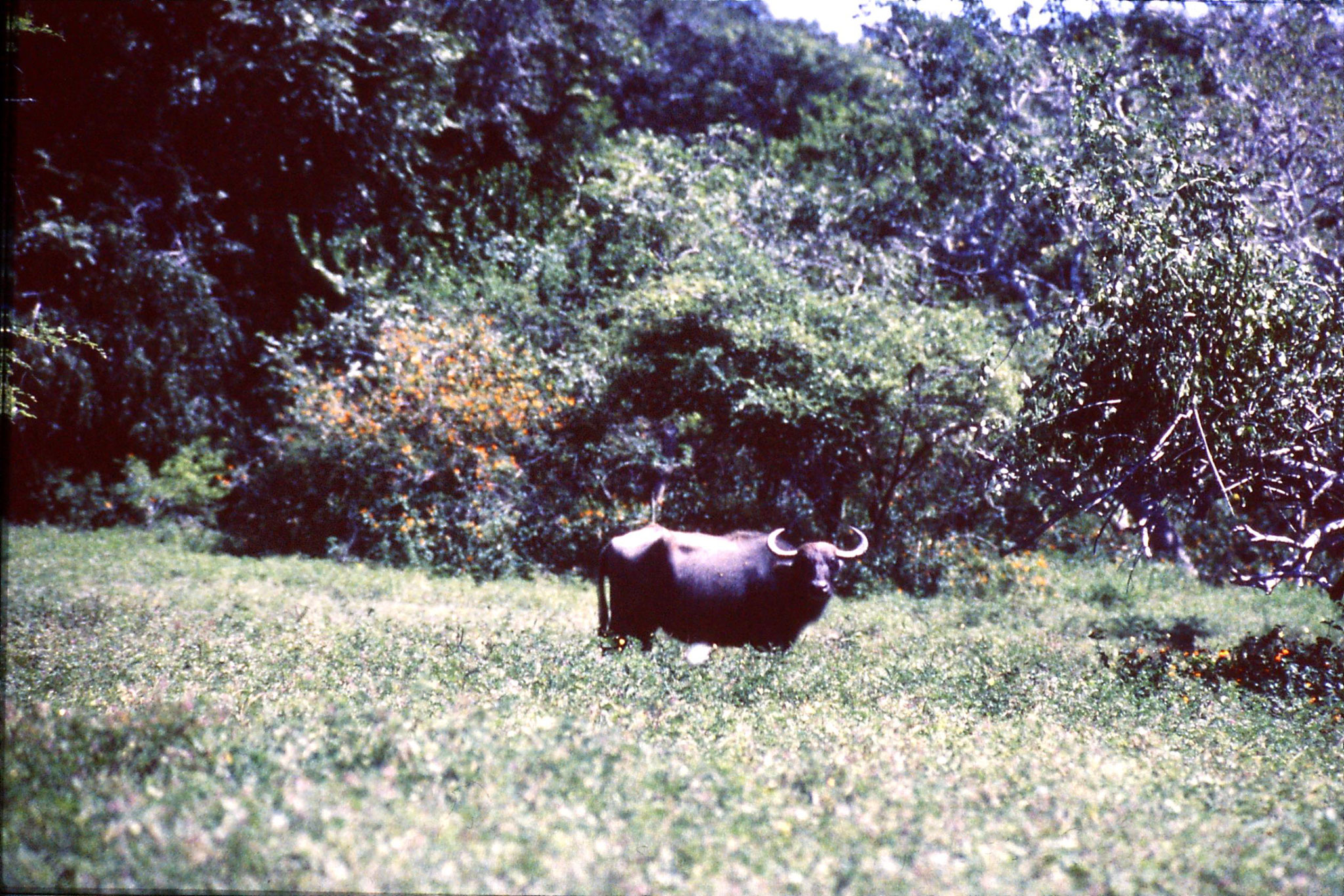 27/1/1989: 21: Yala National Park