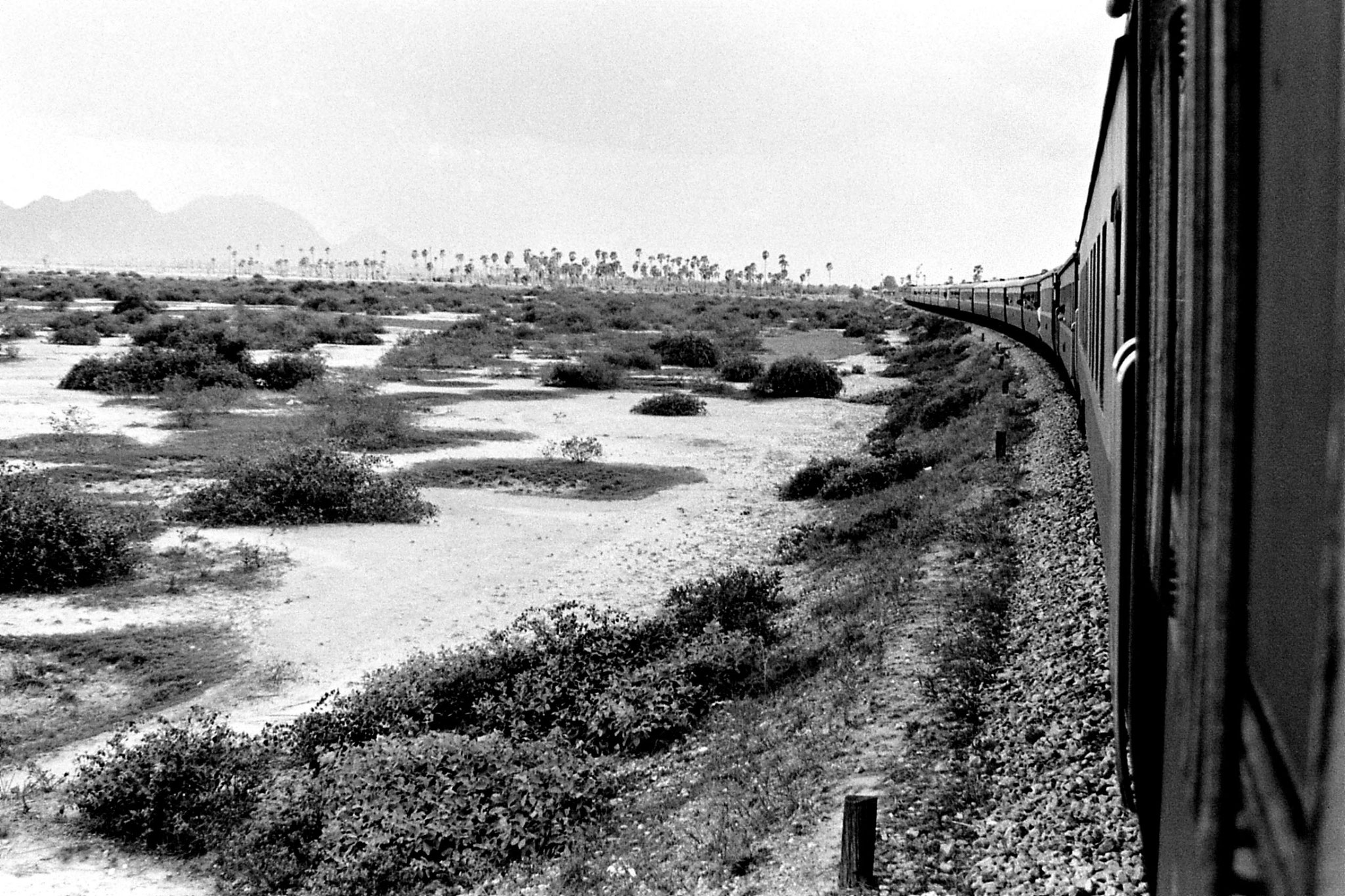 18/6/1990: 29: our train Bangkok to Malaysia, talipot palms