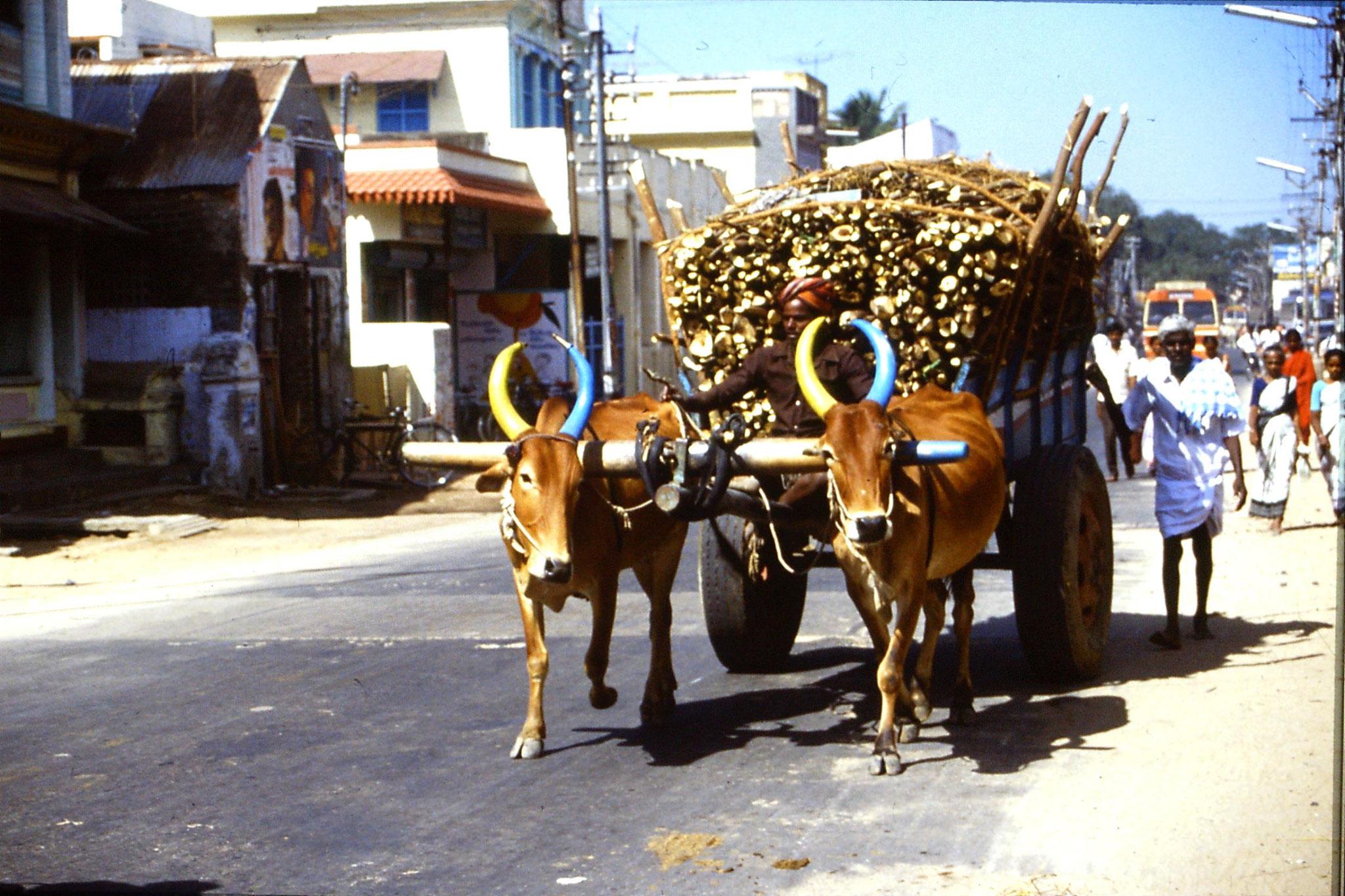 19/1/1990: 19: bullock cart
