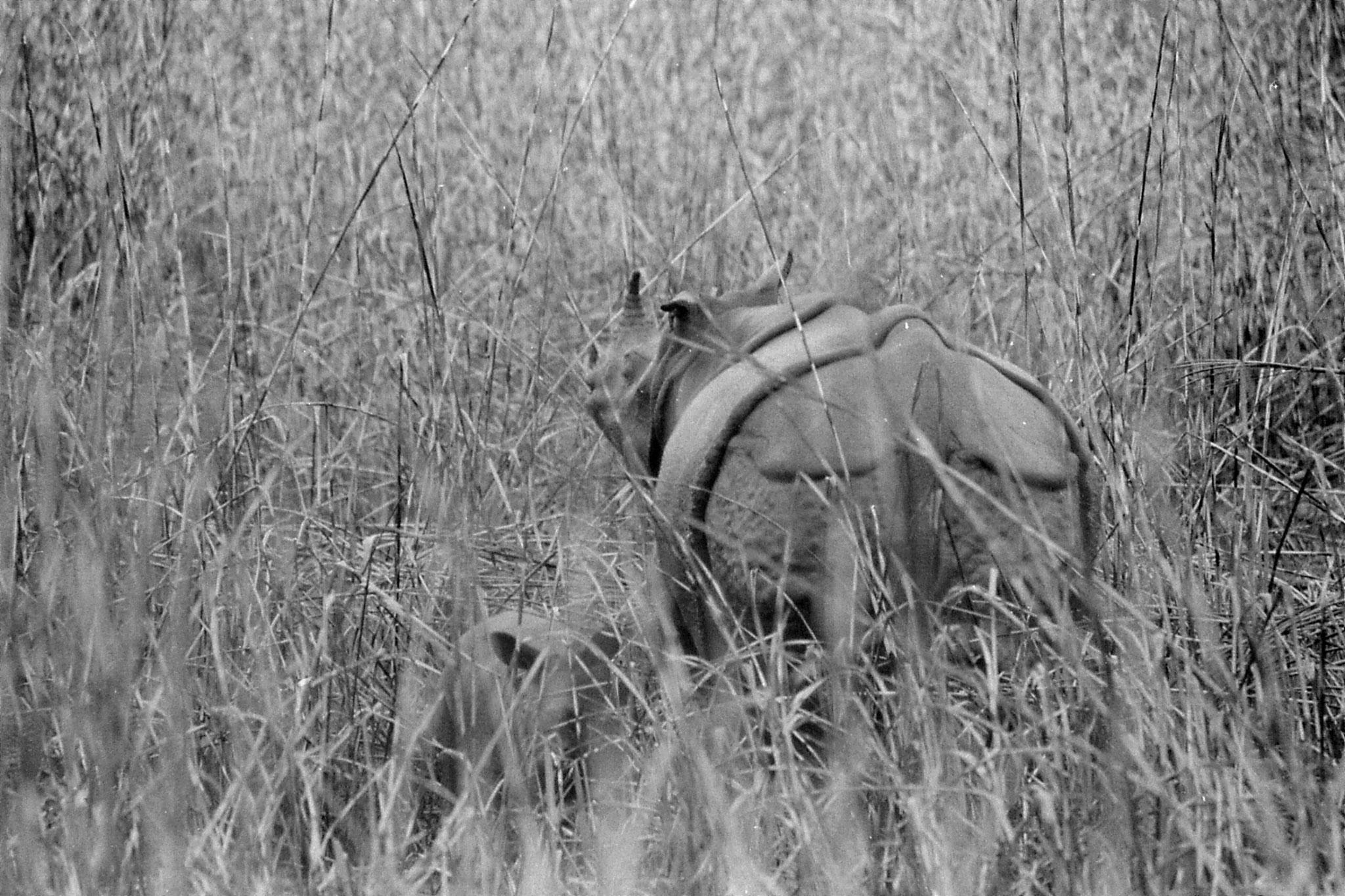 9/4/1990: 23: Kaziranga Indian One Horned Rhino