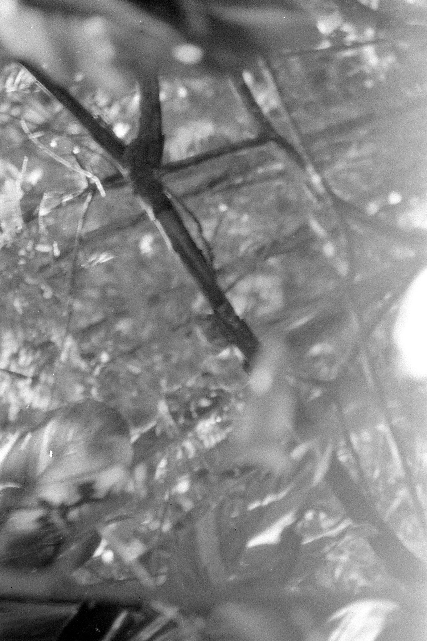 10/1/90: 12: Bangalore palm squirrel in tree