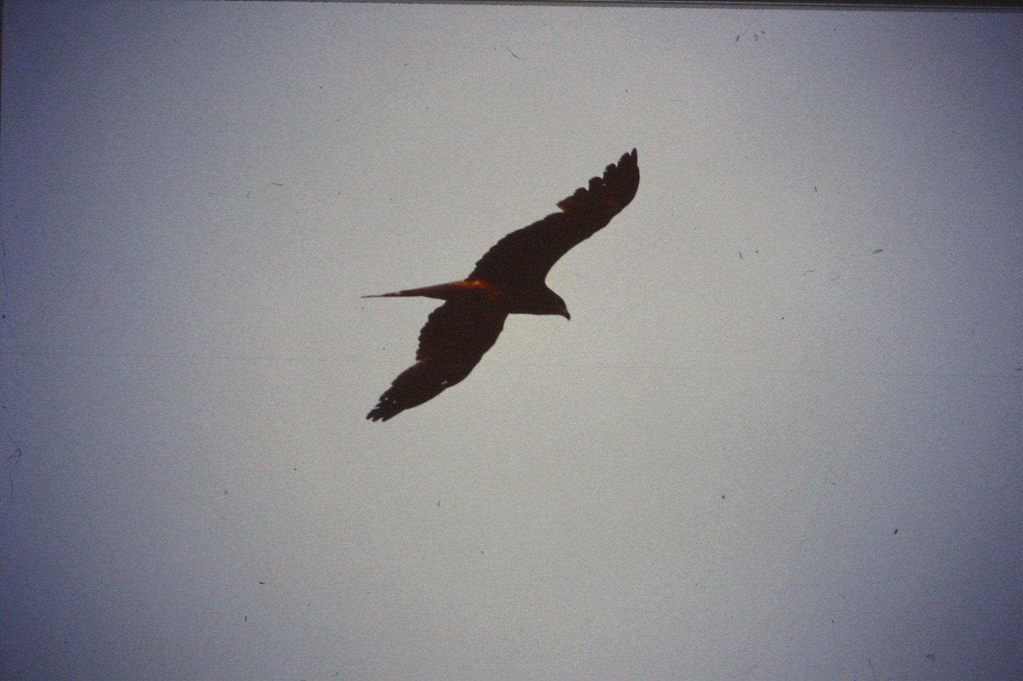 104/18: 13/2/1990 Trichy, kite