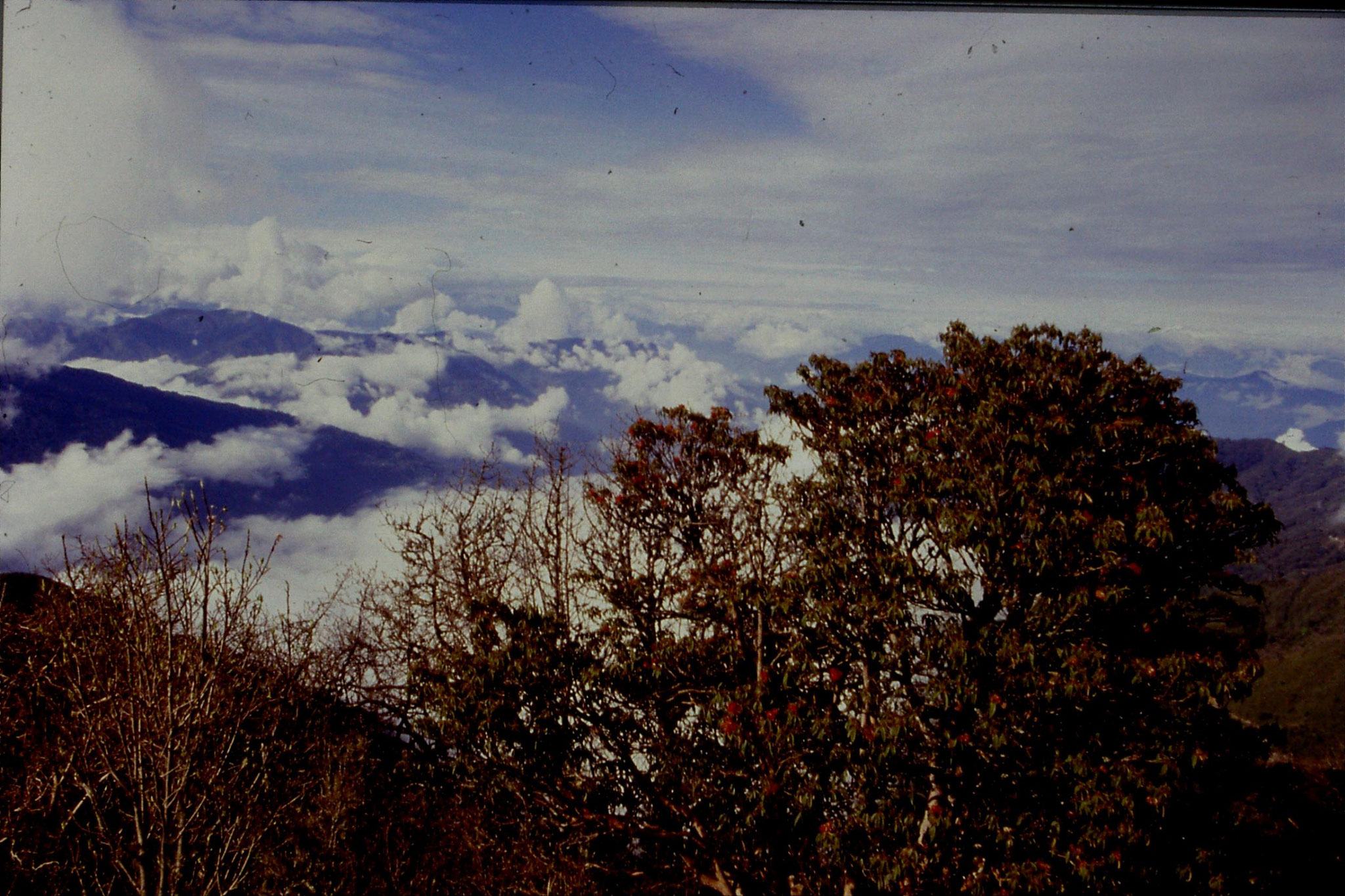 4/5/1990: 5: near Tonglu, view towards Kanchenjunga