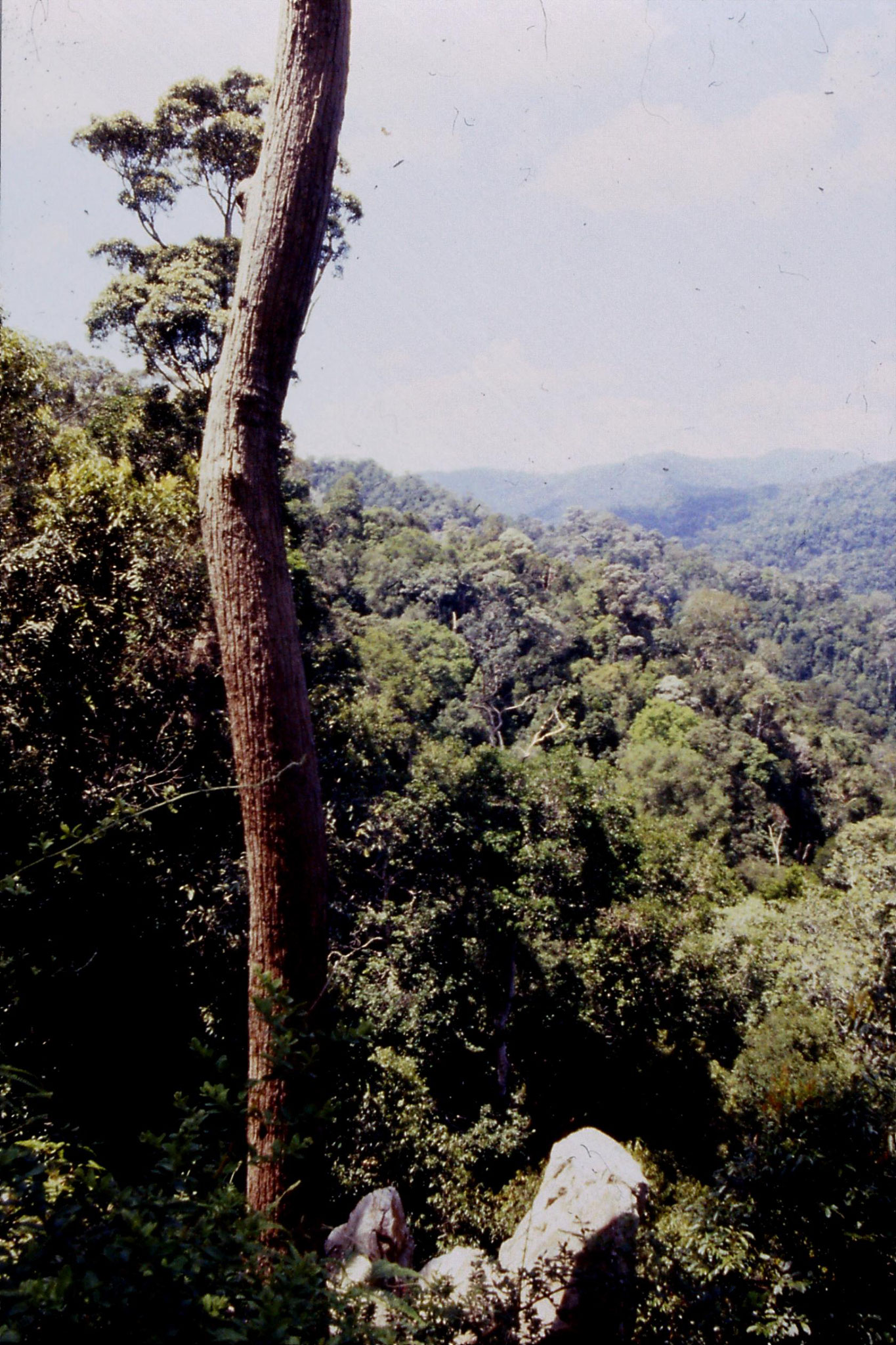 23/6/1990: 4: Tamen Negara looking NE up Sungai Tembeling valley from ridge at 1130ft