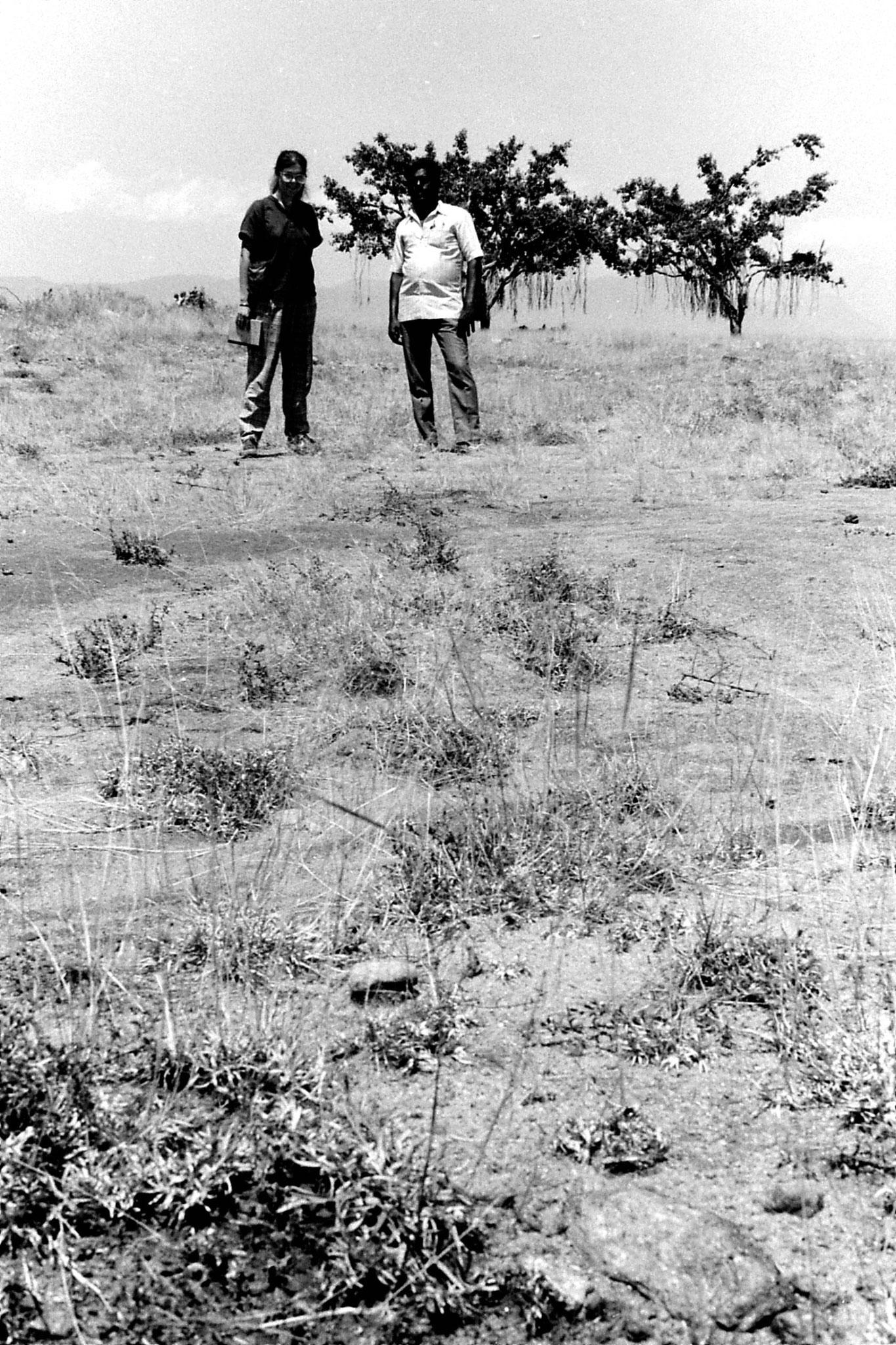 21/2/1990: 22: Batlagundi afforestation project
