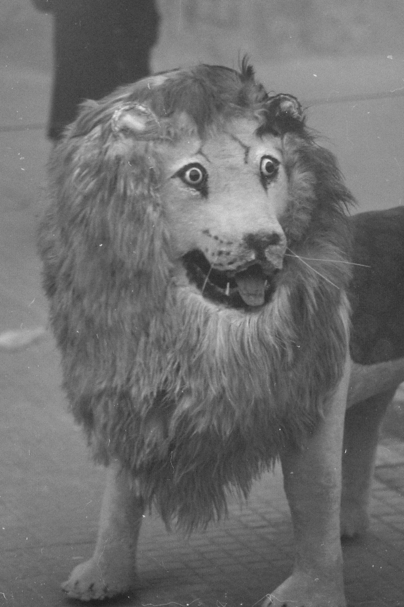 19/11/1988: 11: Beijing Zoo
