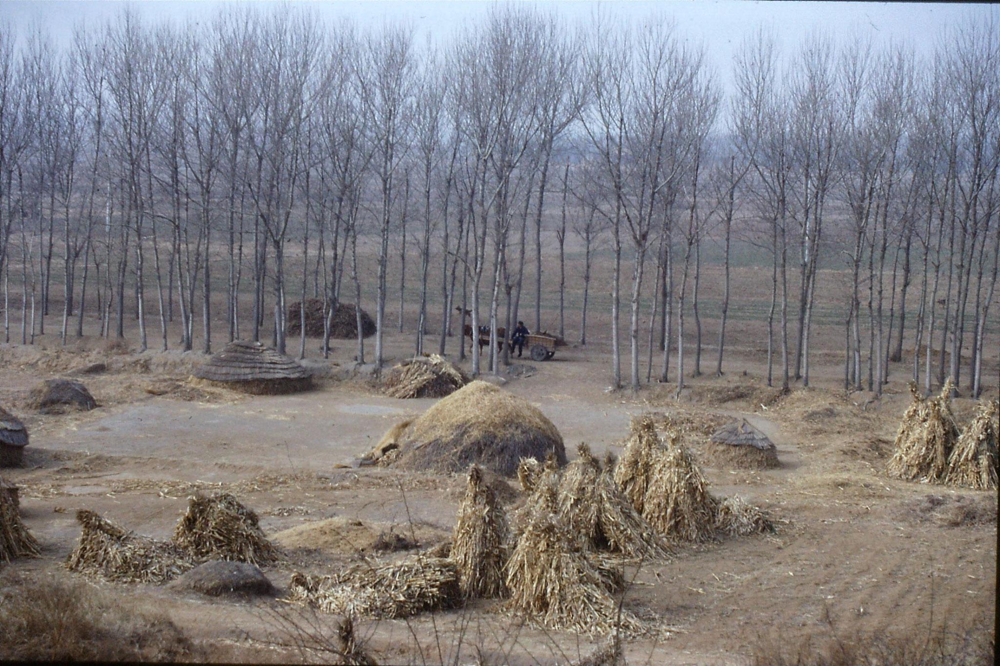 15/2/1989: 6: Liu Bo's village