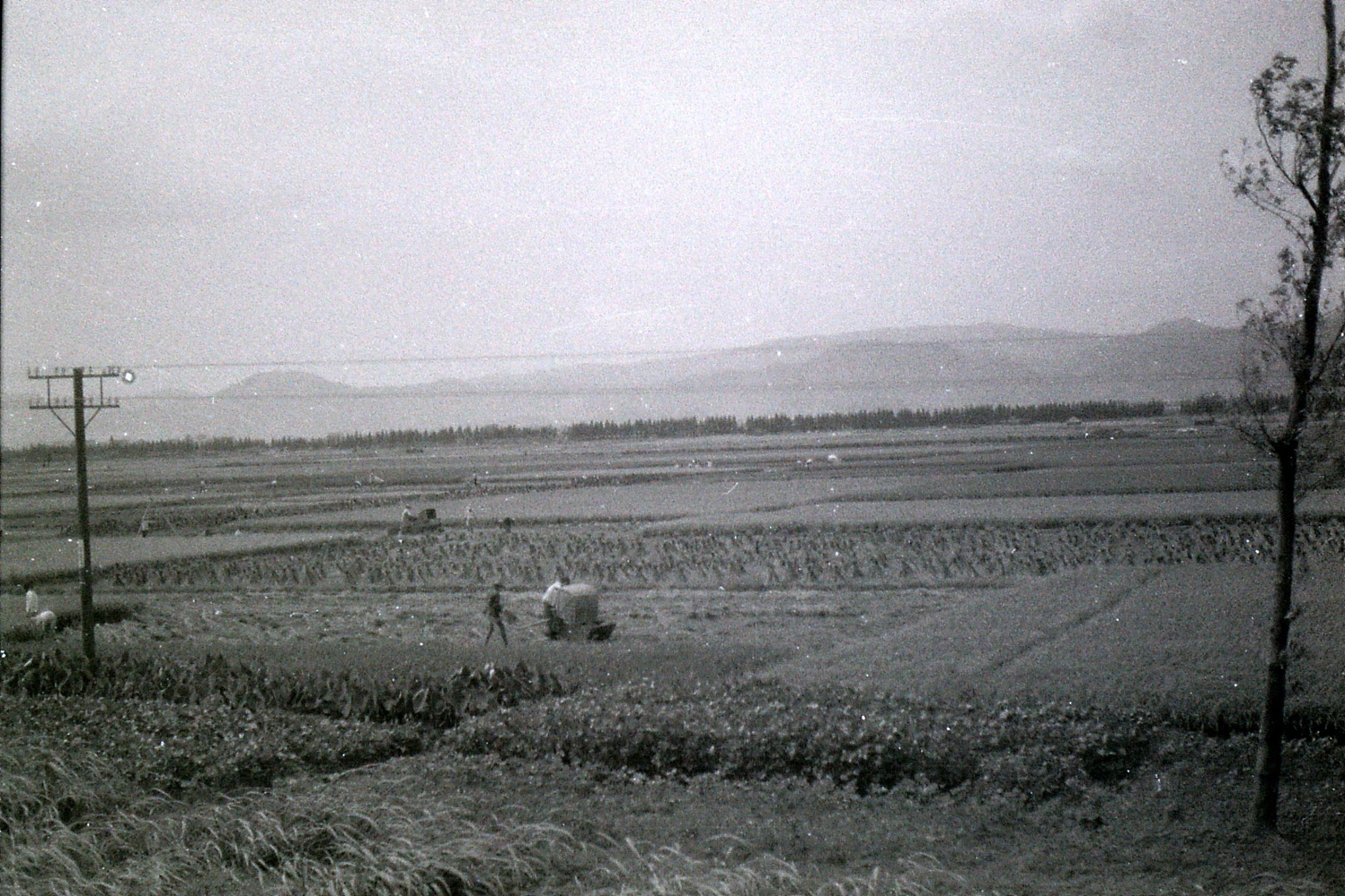 23/7/1989: 21: fields from train to Ningbo