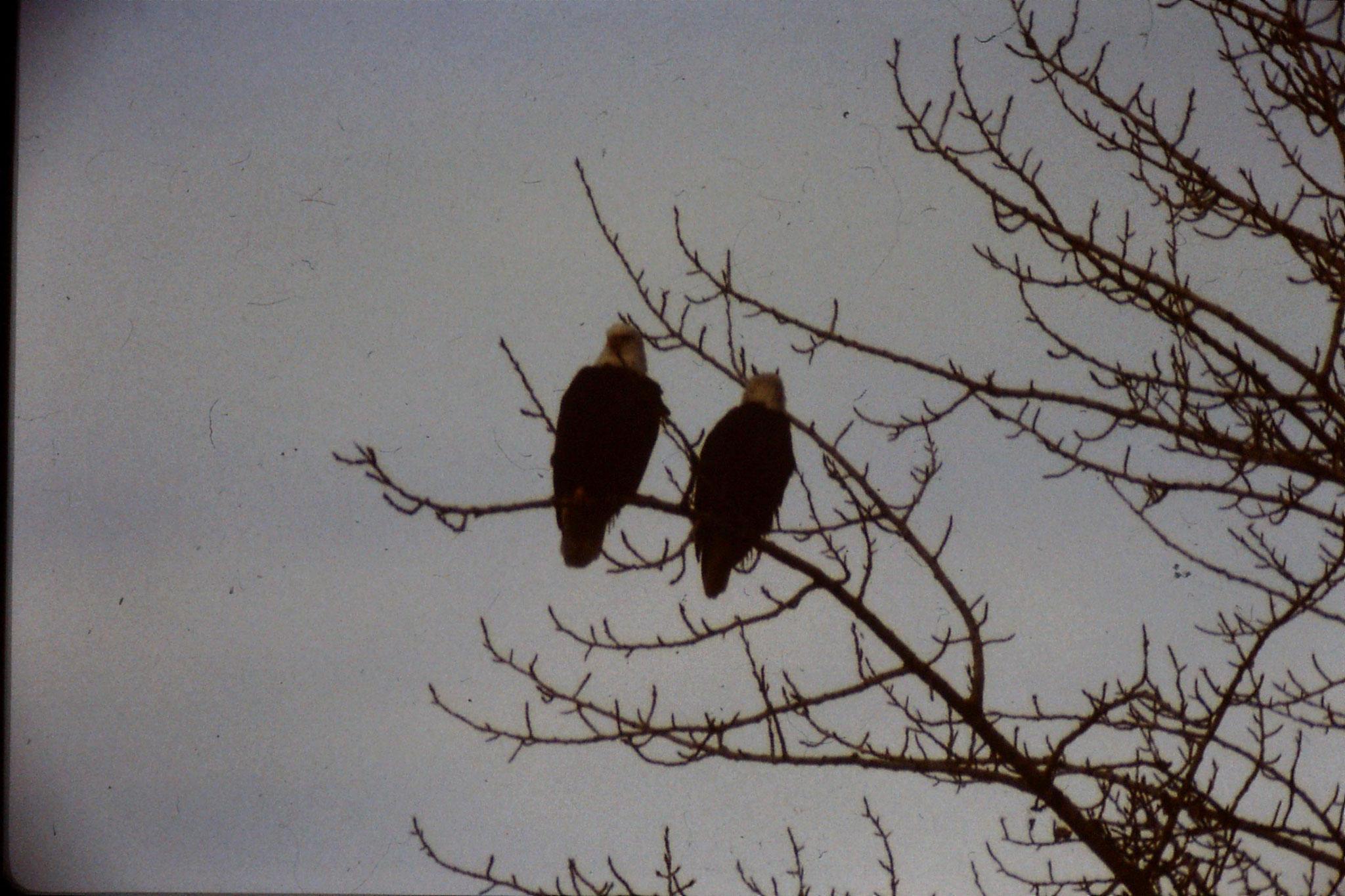 3/2/1991: 10: Boise