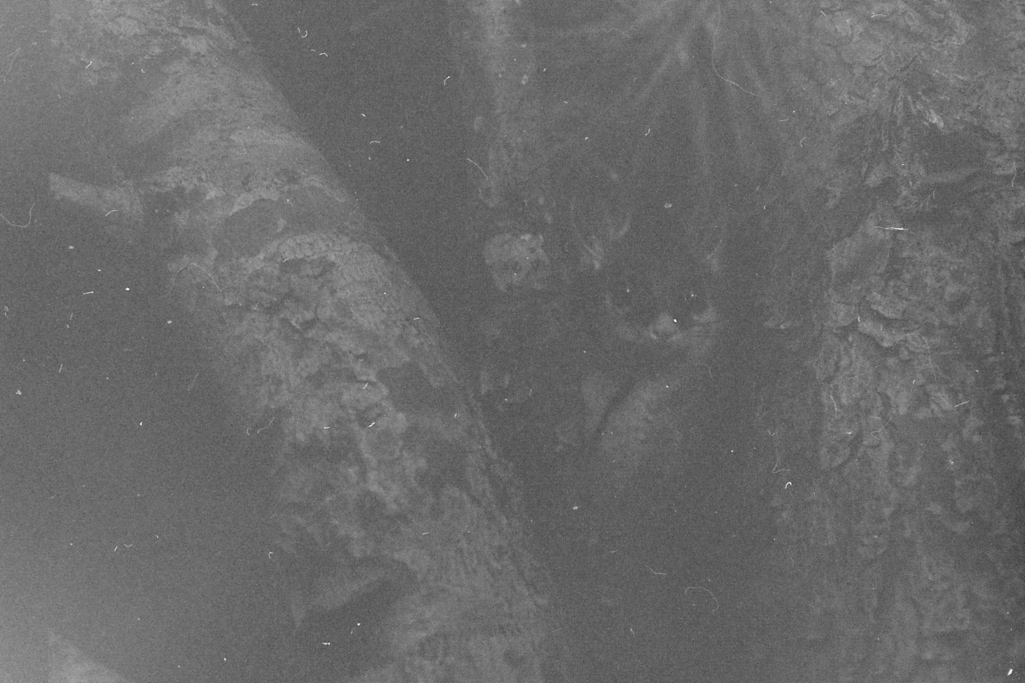 22/9/1990: 3: Dimboola Caravan Park possums