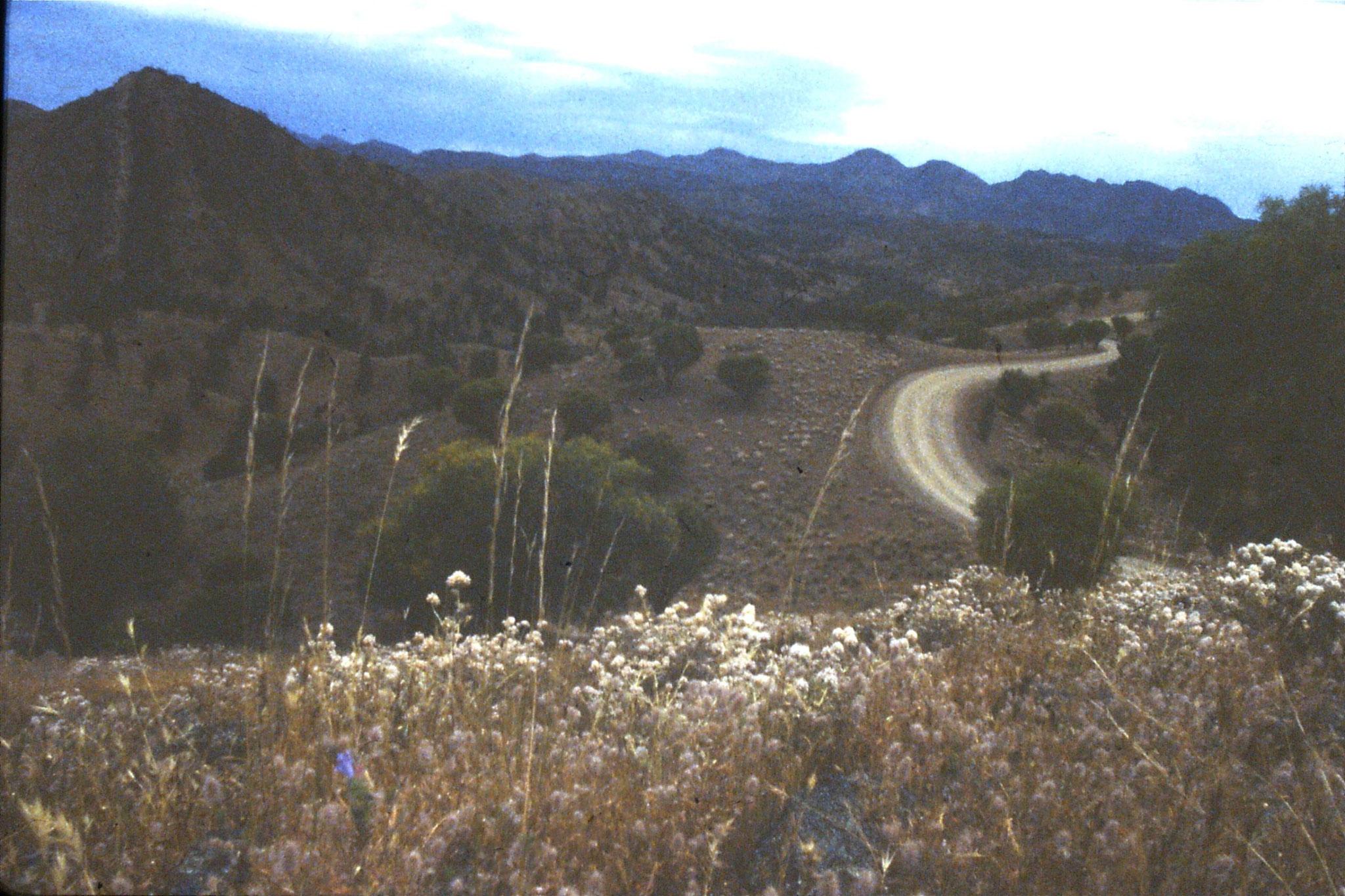 7/11/1990: 34: Bungaroo Valley
