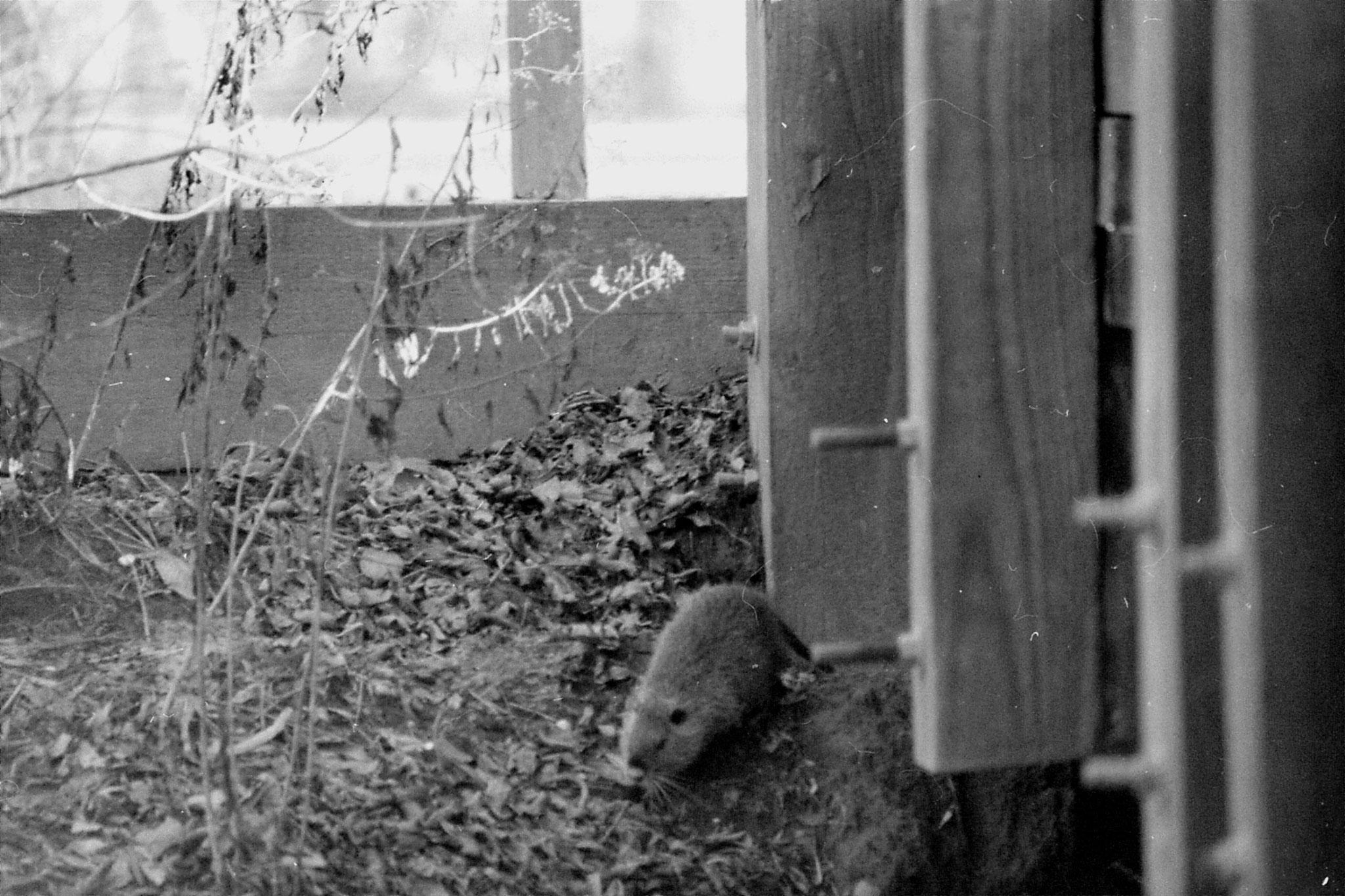 13/1/1991: 3: St Bernard Louisiana State Park