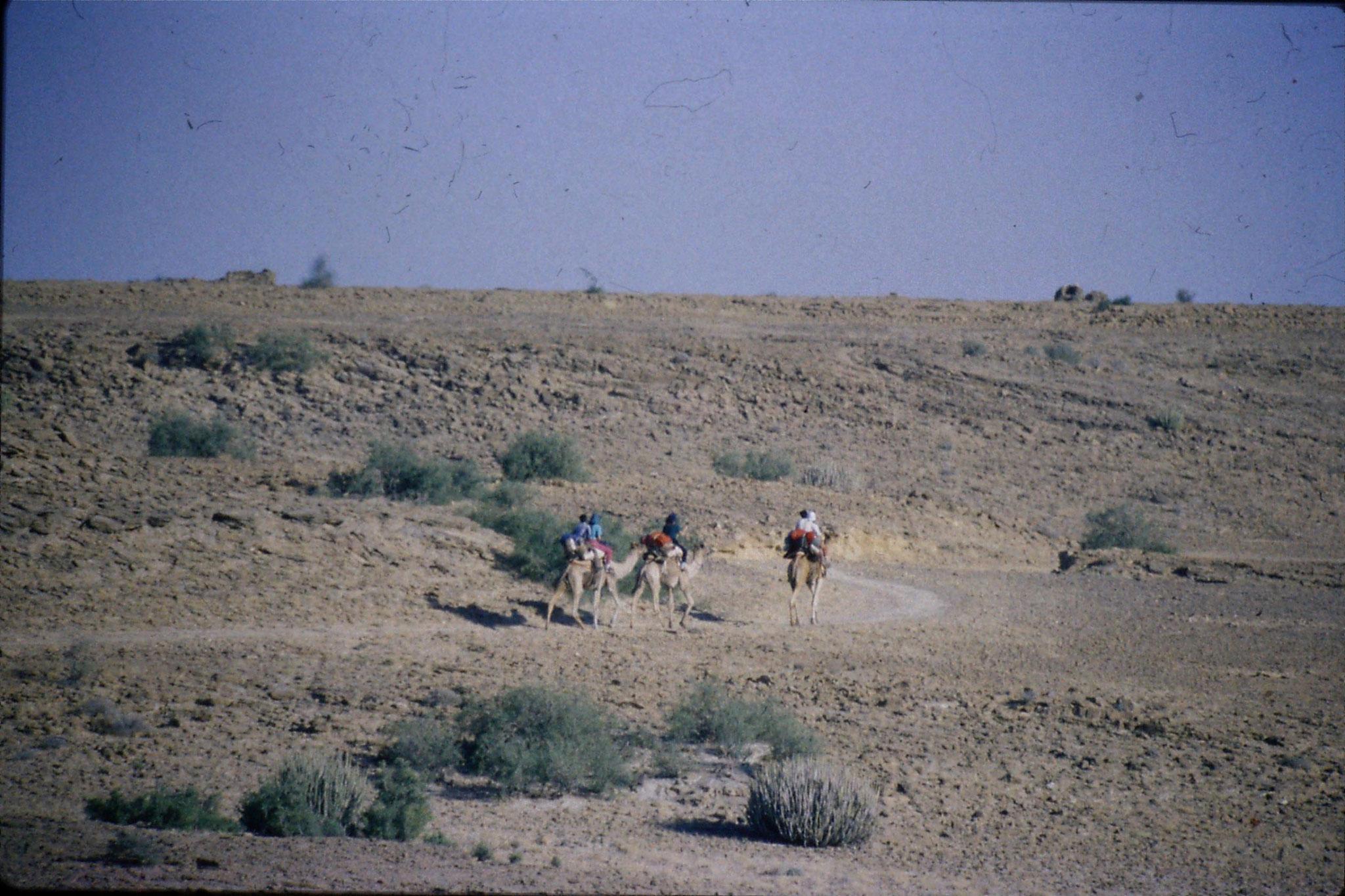 4/12/1989: 11: camel safari