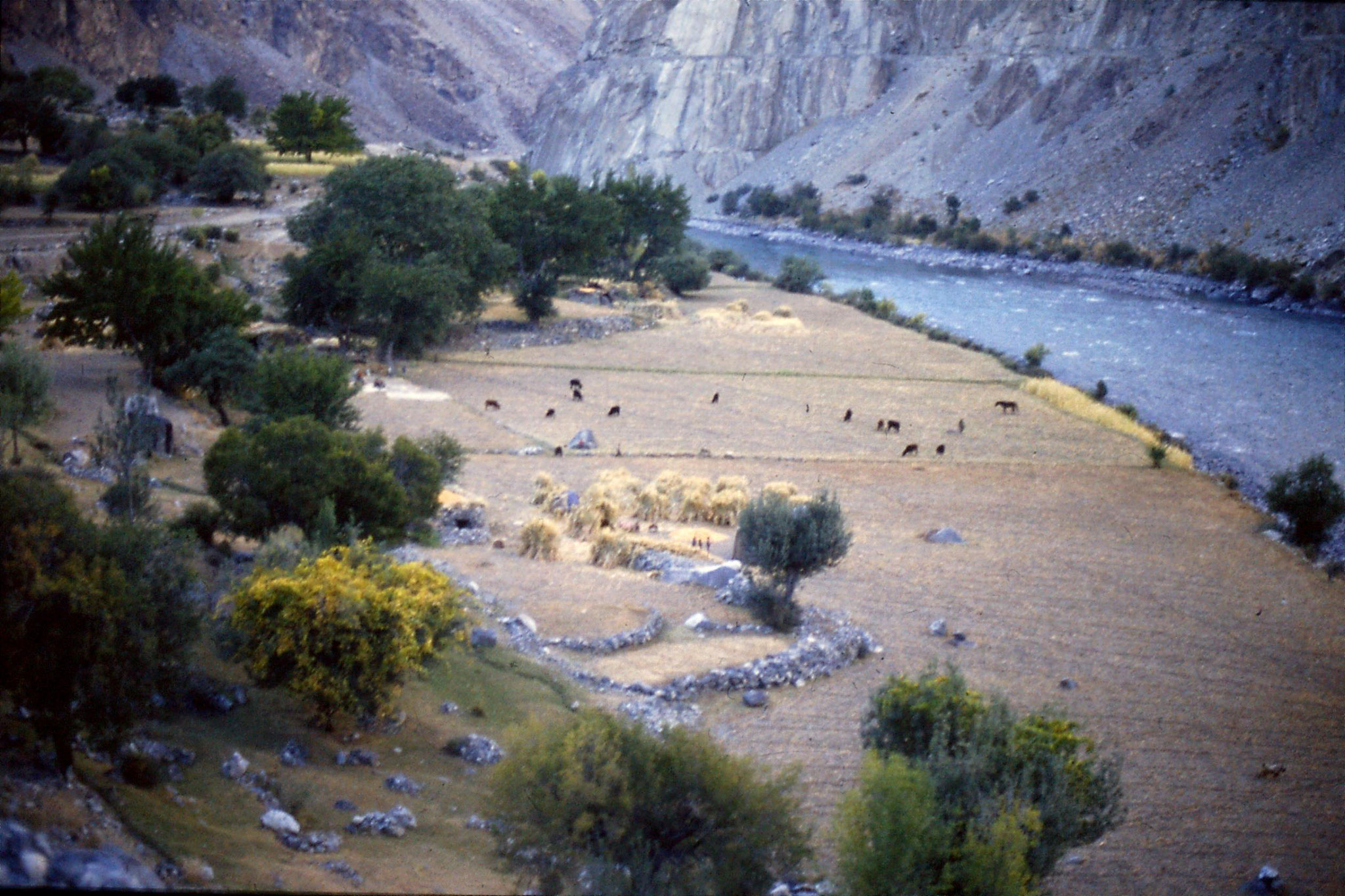 25/10/1989: 32: Ghizer river, harvest