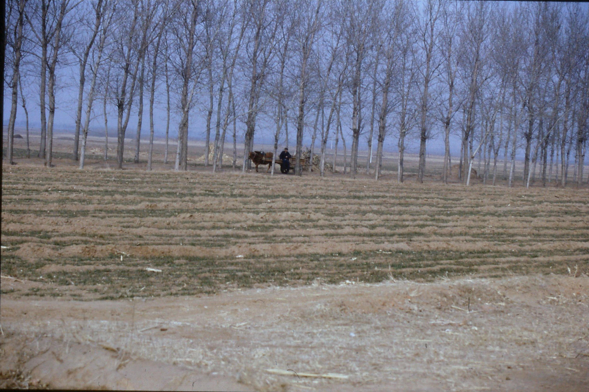 15/2/1989: 5: Liu Bo's village