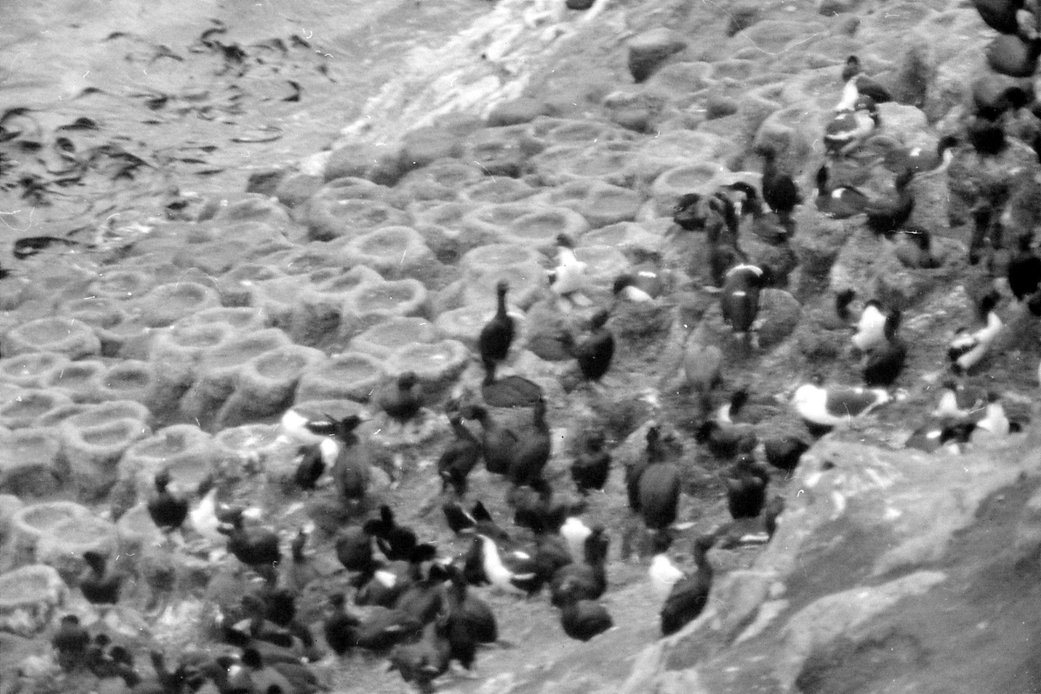 19/8/1990: 22: Dunedin