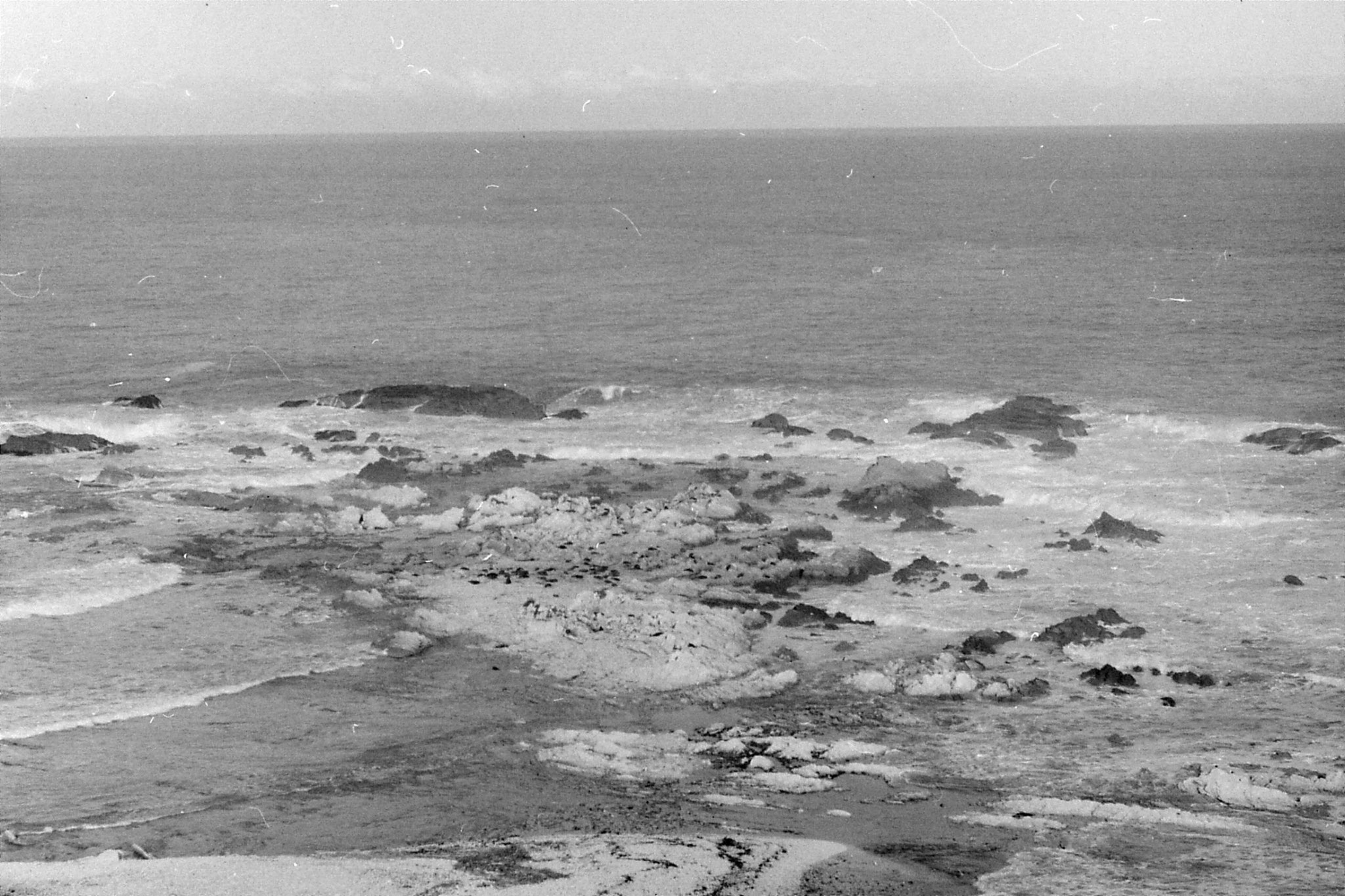 9/8/1990: 9: Kaikoura second seal colony