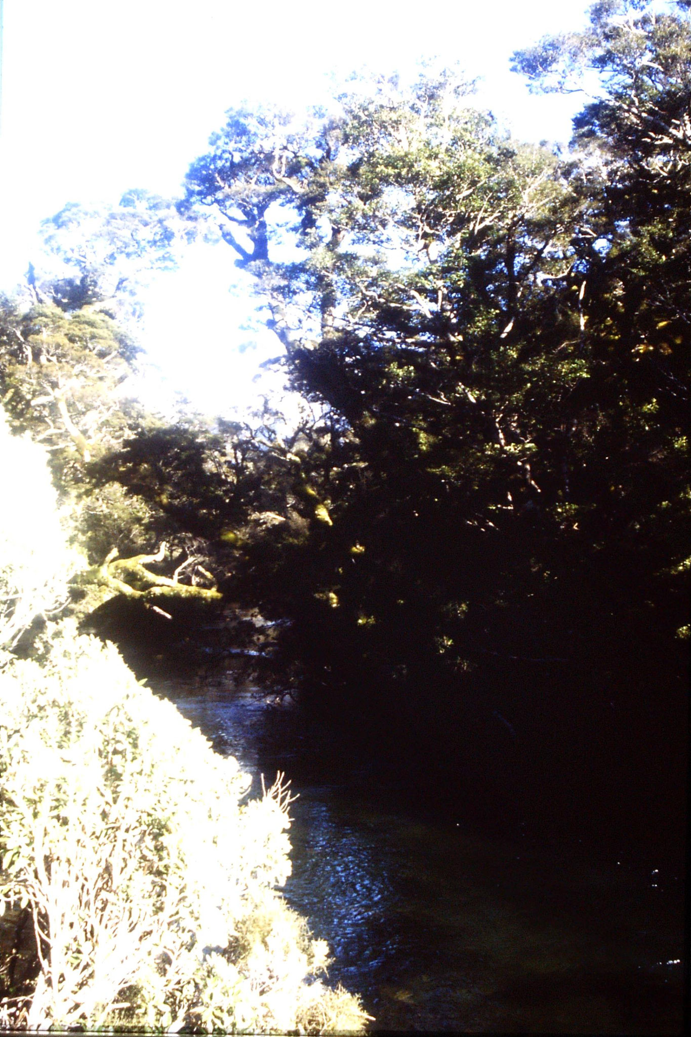15/8/1990: 33: stream flowing from Lake Gunn