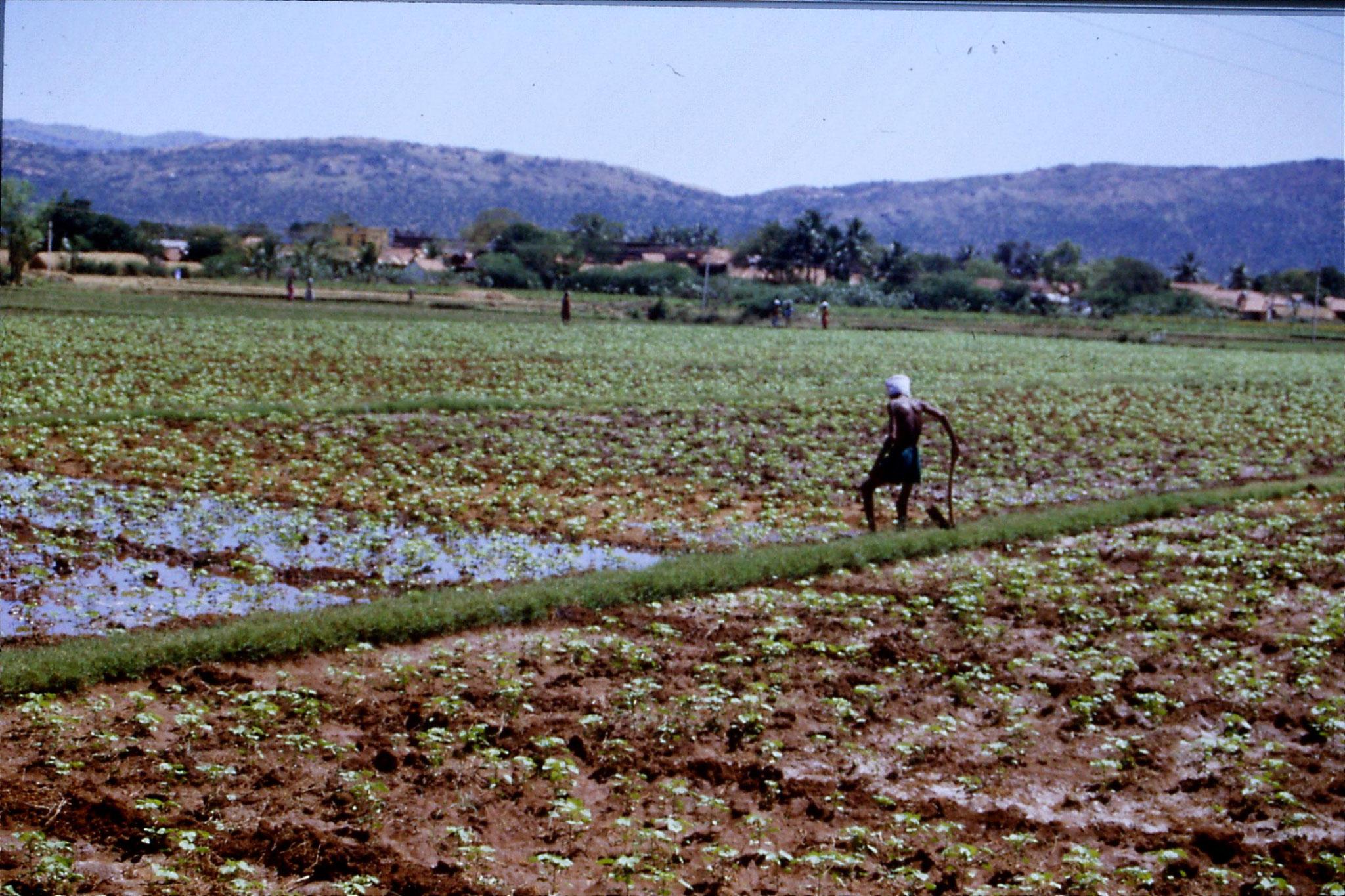 104/29: 21/2/1990 Batlagundi afforestation project