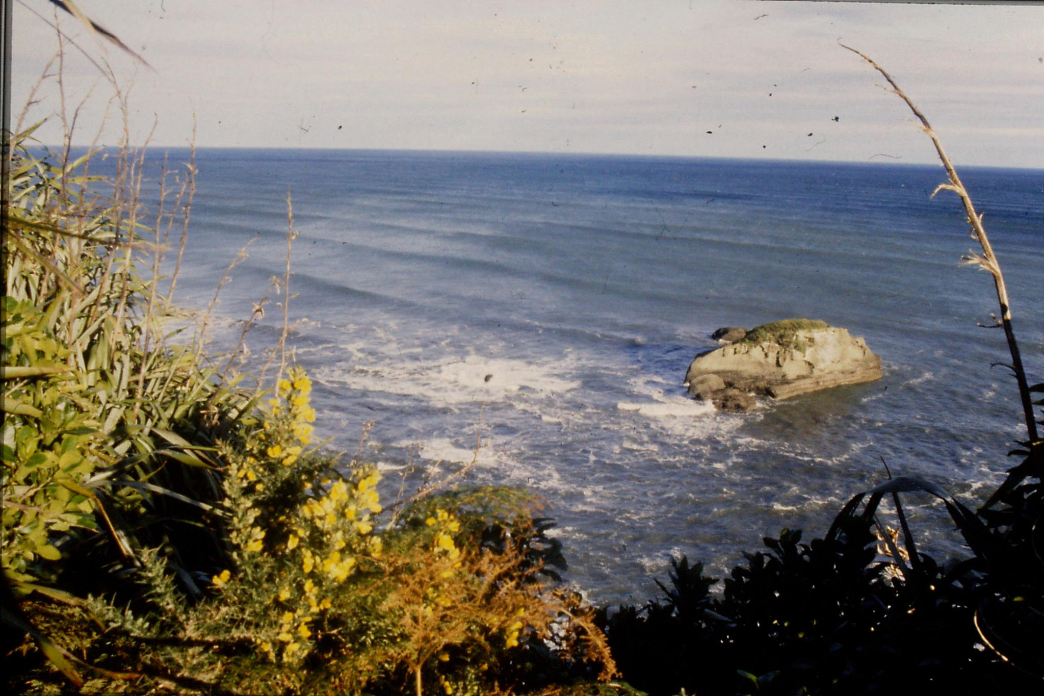 22/8/1990: 37: gorse and coastal rocks where we stayed the night