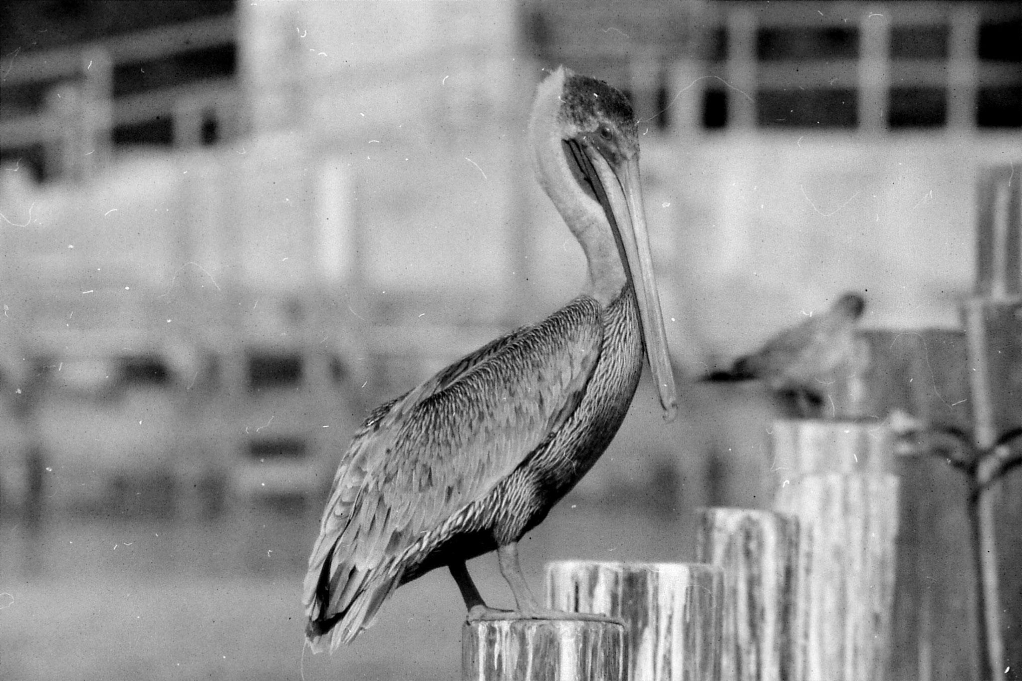 21/12/1990: 12: Everglades
