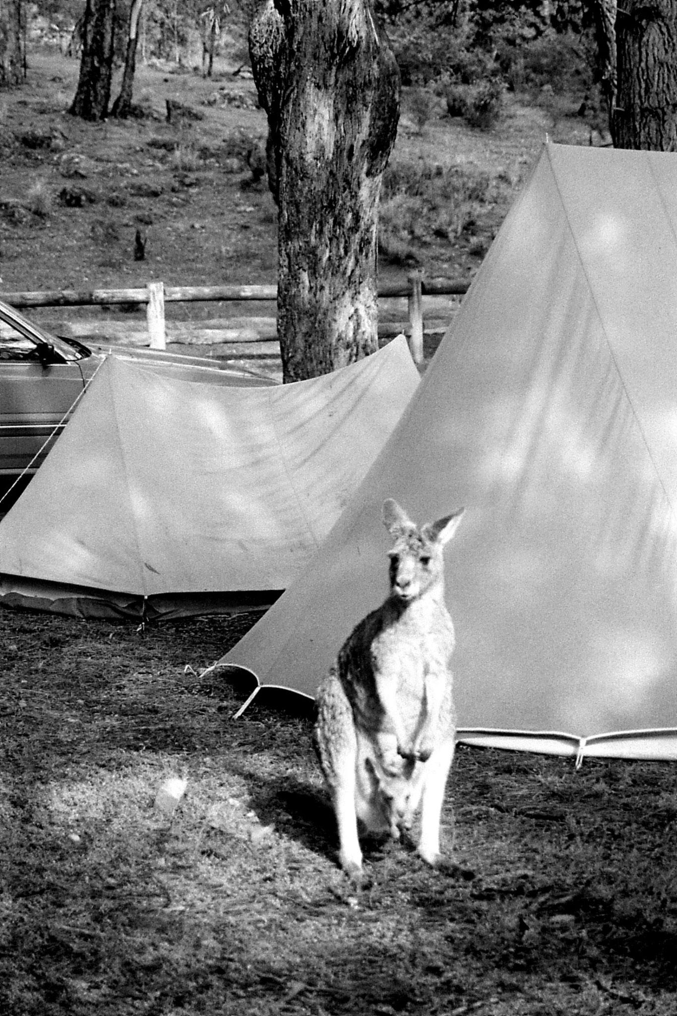 21/9/1990: 27: Grampians Zumsteins campsite