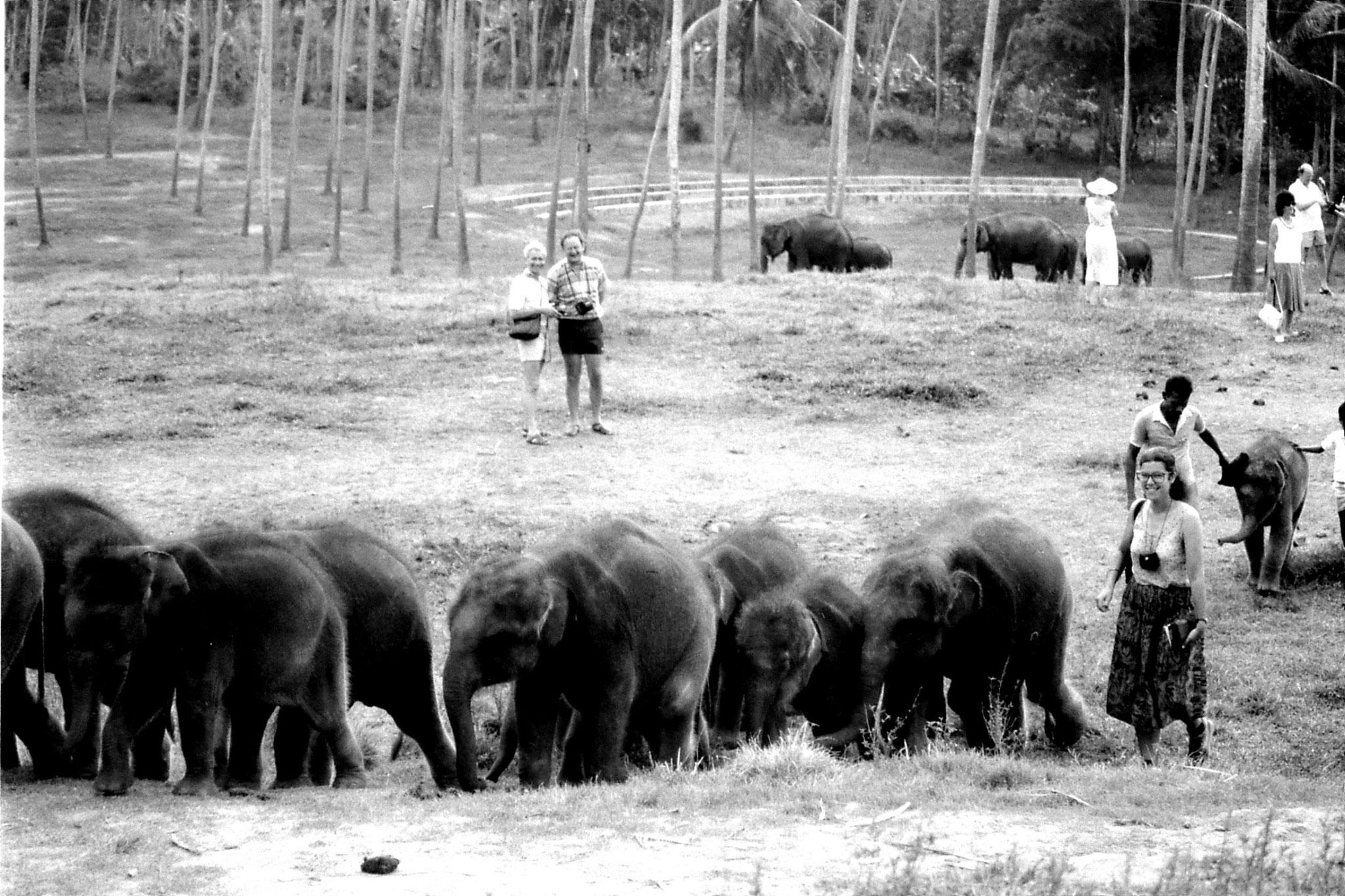10/2/90: 33: Kegalla elephant orphanage
