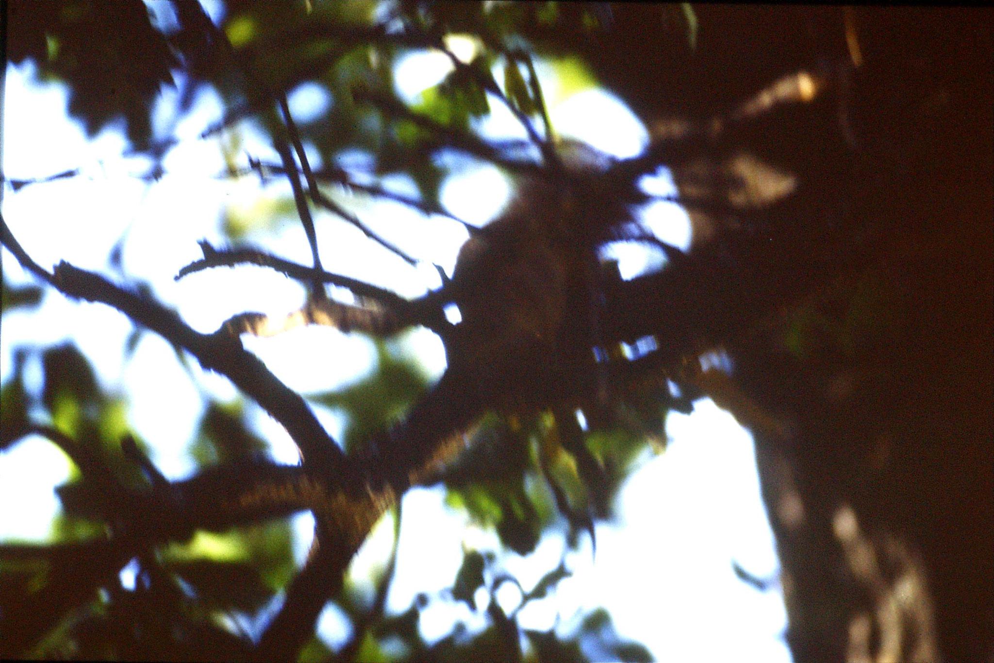 16/9/1988: 11: Oslo Folk Museum red squirrels