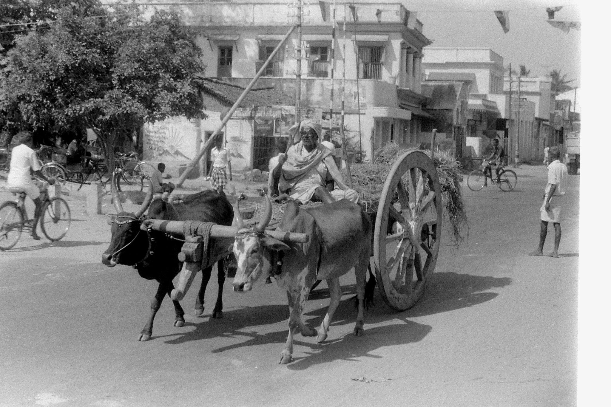 19/1/90: 19: Kanchipuram - bullock cart
