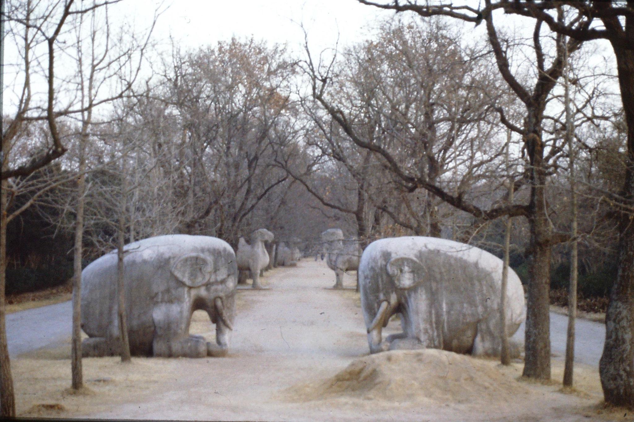 12/12/1988: 5: Nanjing Linggu Park