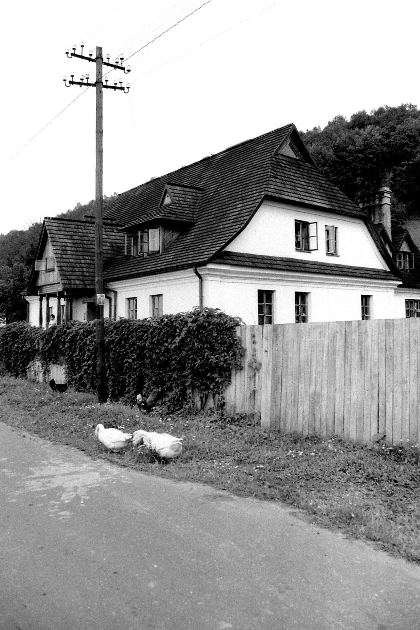 27/8/1988: 5: geese by Lublin Student Hostel, Kasimierz
