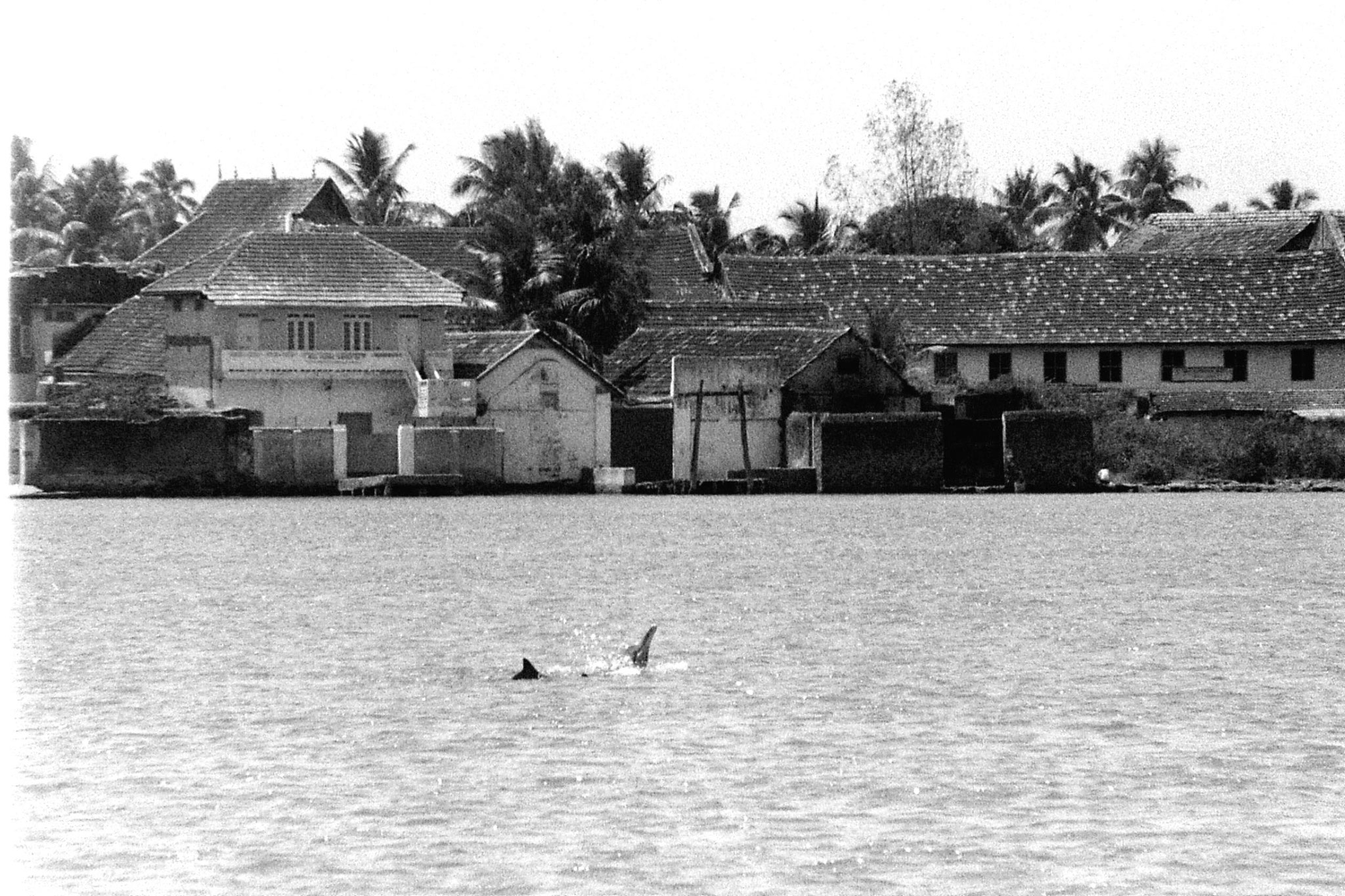 25/2/90: 5: Cochin dolphins and views of Fort Cochin