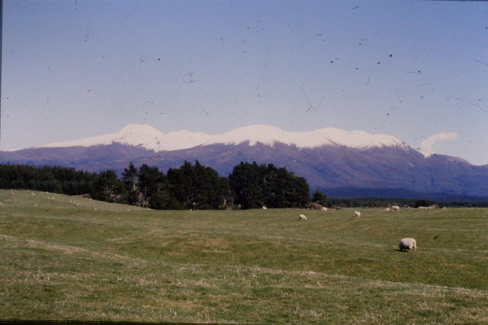 30/8/1990: 12: Tongariro and Ngauruhoe from east