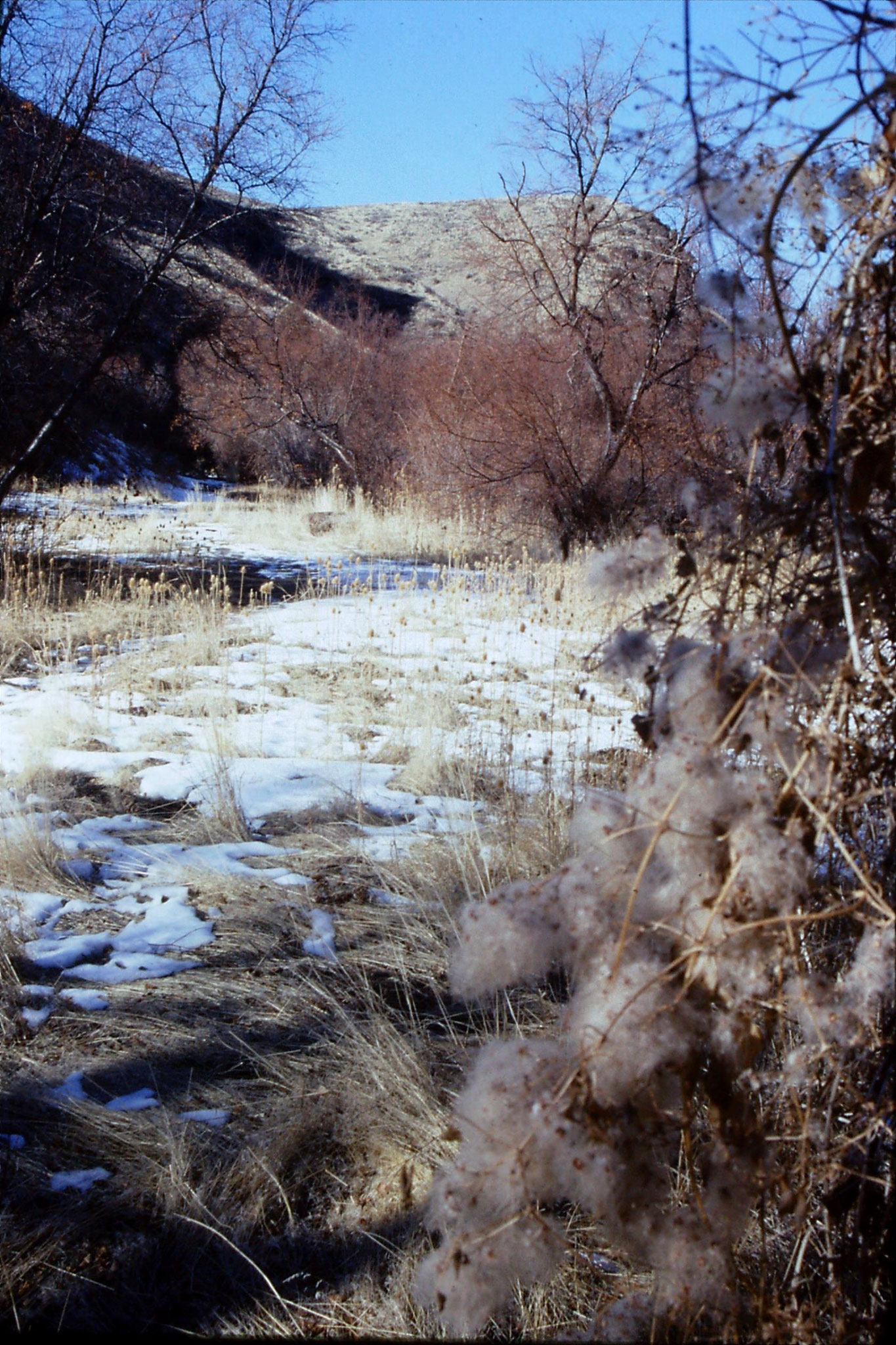 20/1/1991: 16: Rock Creek Canyon