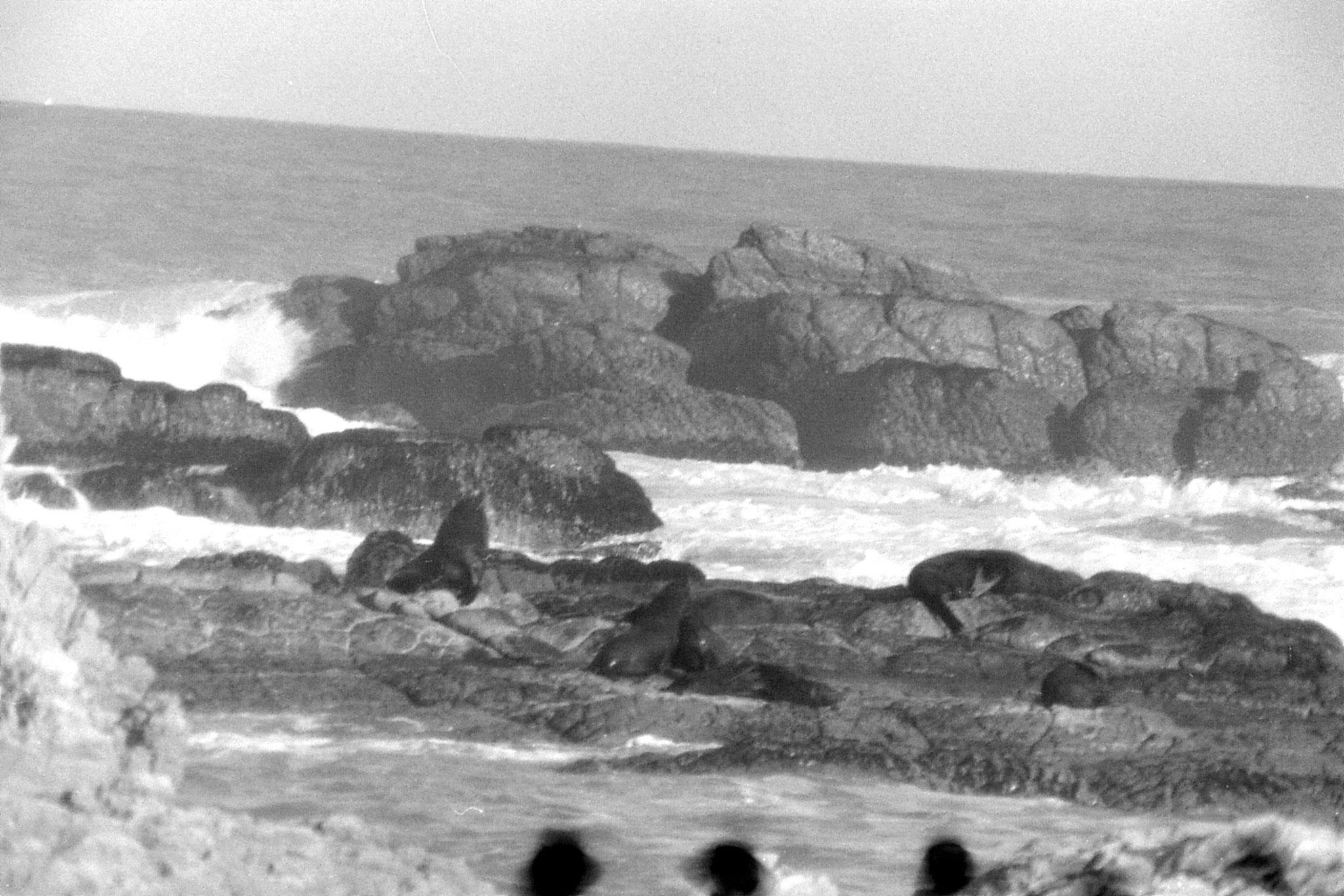 9/8/1990: 24:Kaikoura: seals