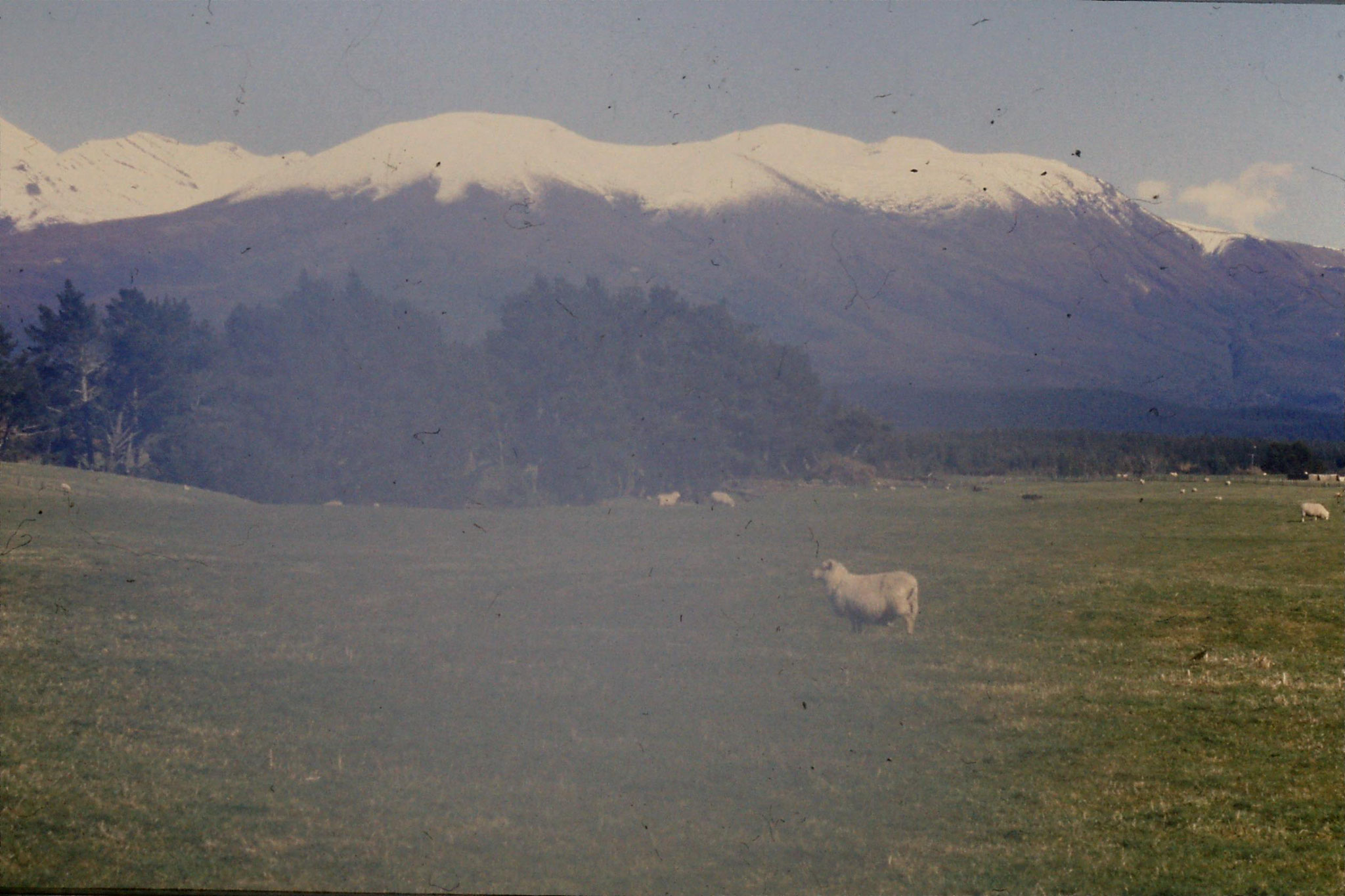 30/8/1990: 11: Tongariro from east