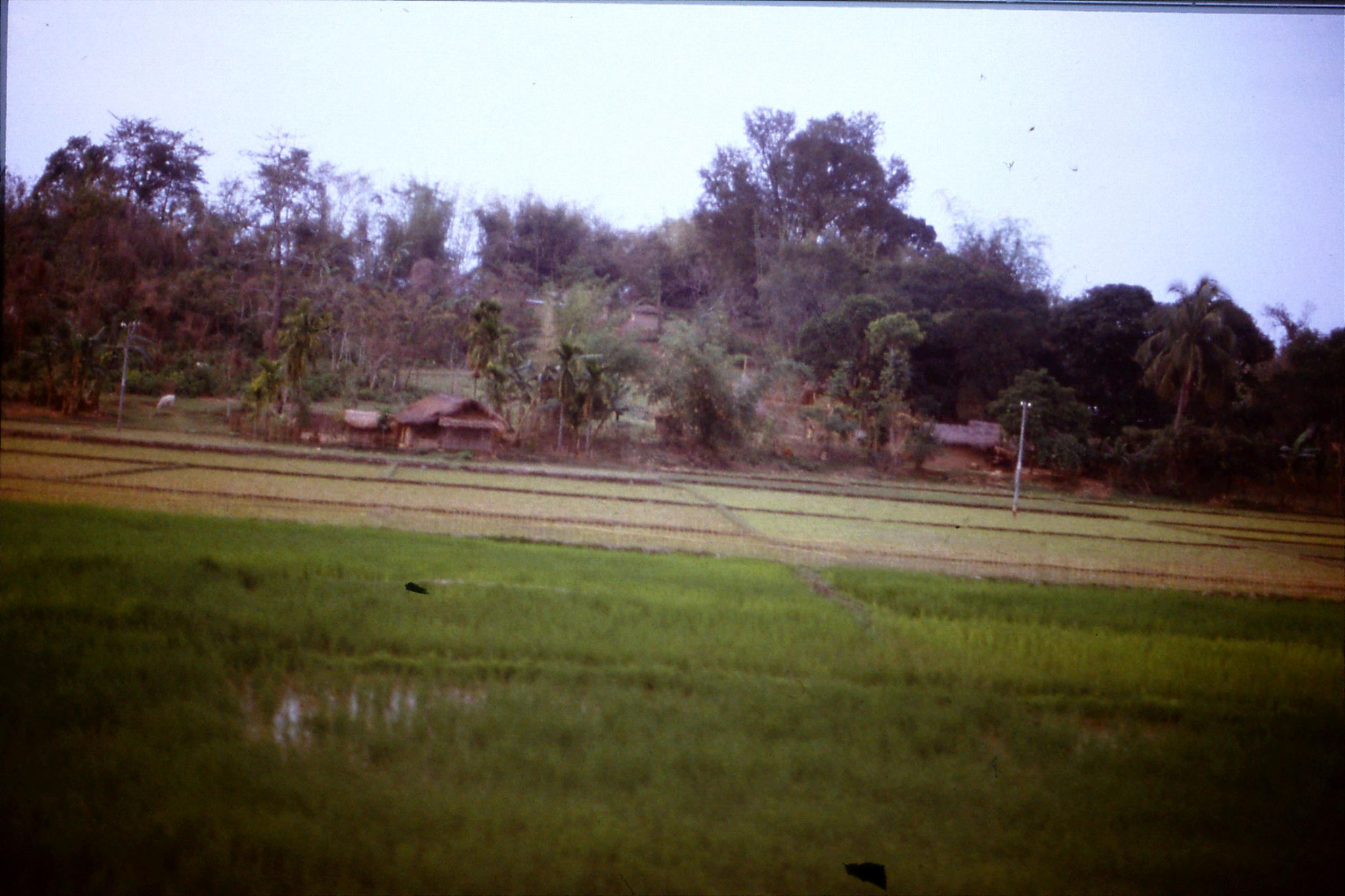 109/27: 11/4 After Gauhati - cottages and ricefields
