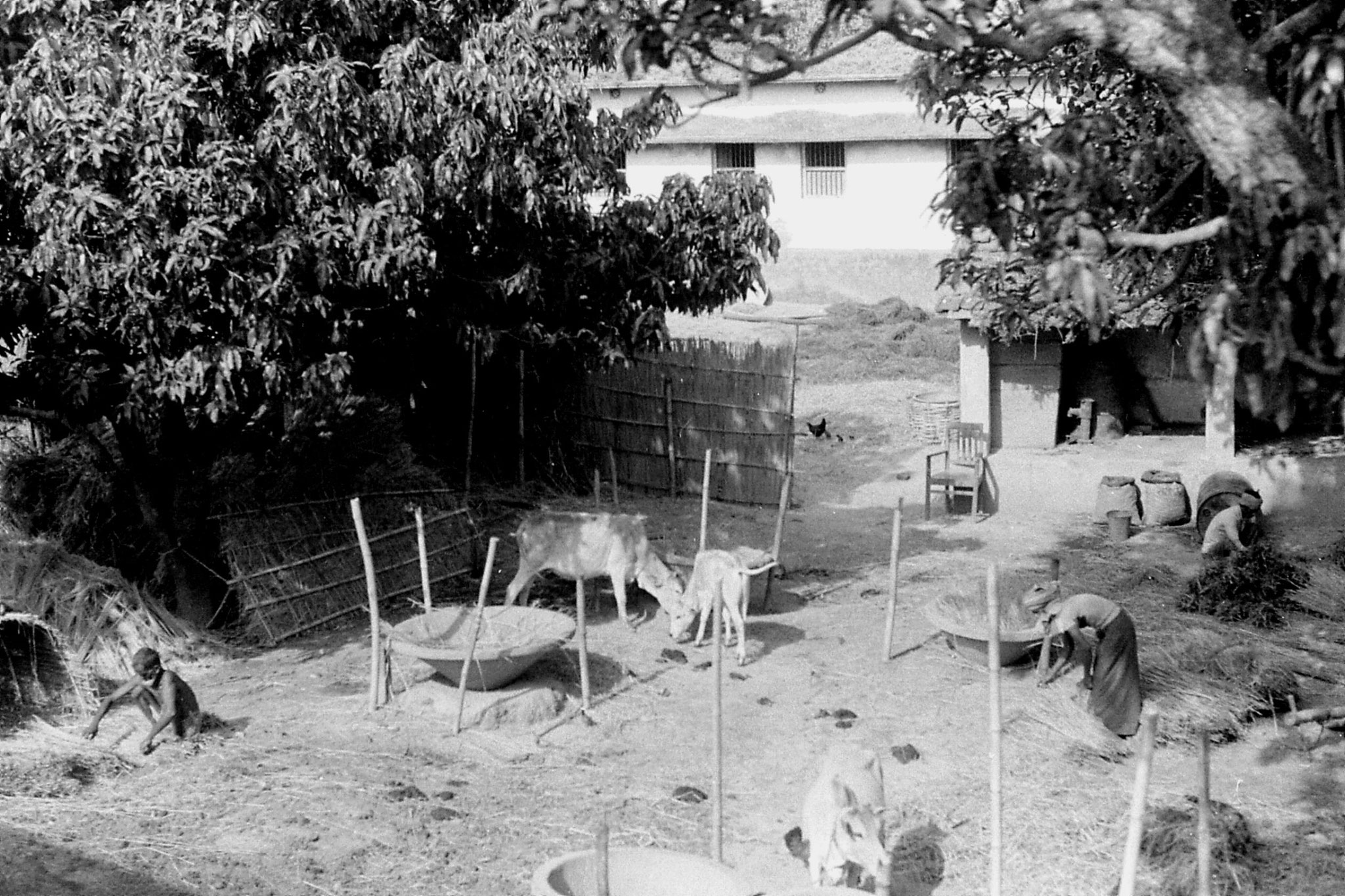 7/4/1990: 17: East Bihar after Katihar