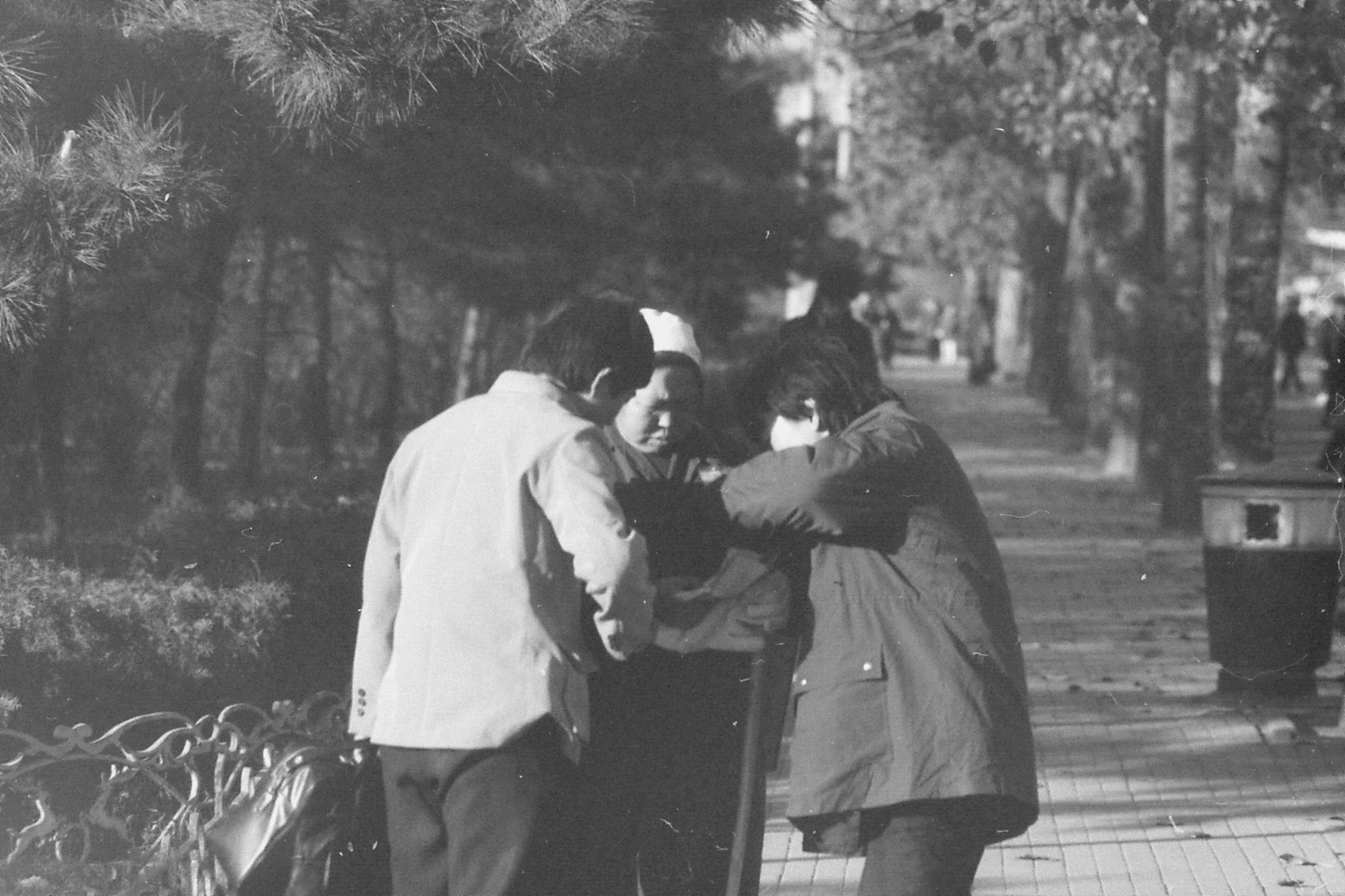 22/11/1988: 21: along road to zoo and Purple Bamboo Shoots Park