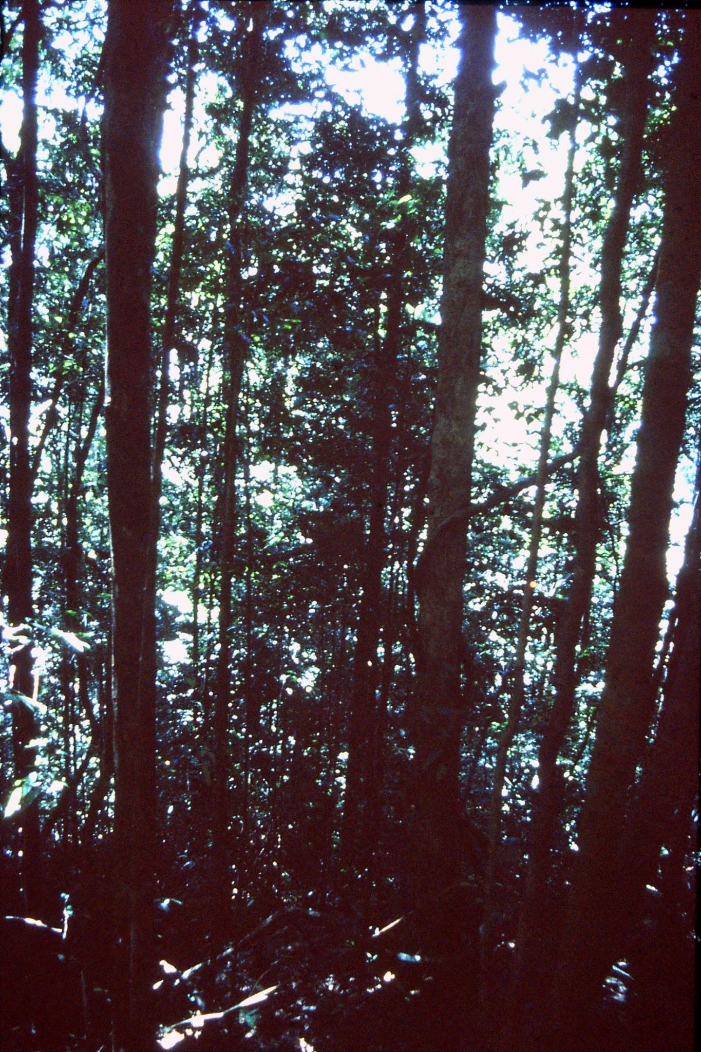 30/1/1990: 9: Sinharaja forest