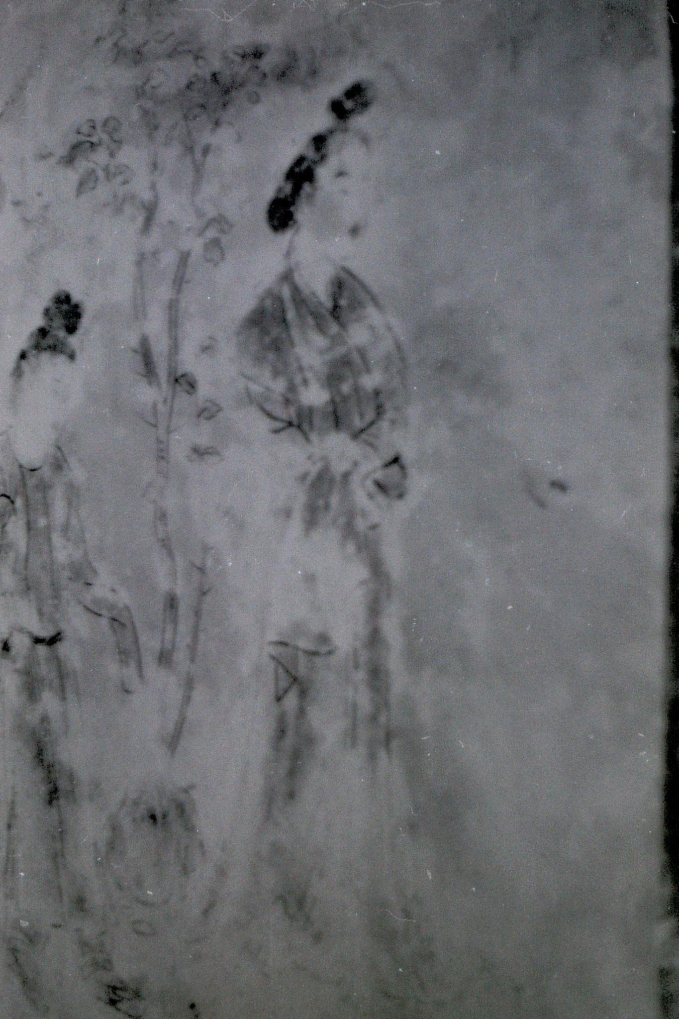 7/3/1989: 24: Xianyang museum fresco