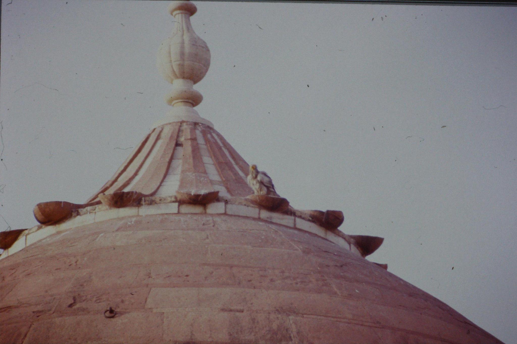 109/4: 30/3/1990 birds on Taj