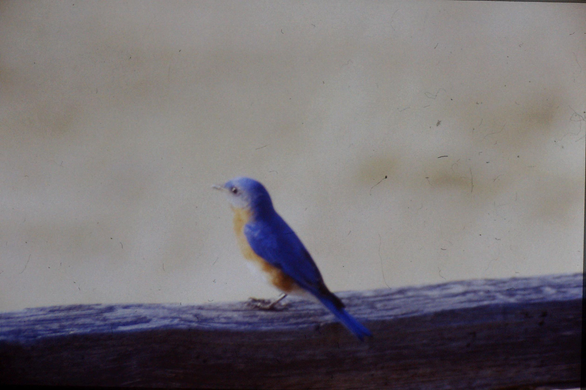 21/3/1991: 5: Blue Bird at Mary Potter's place
