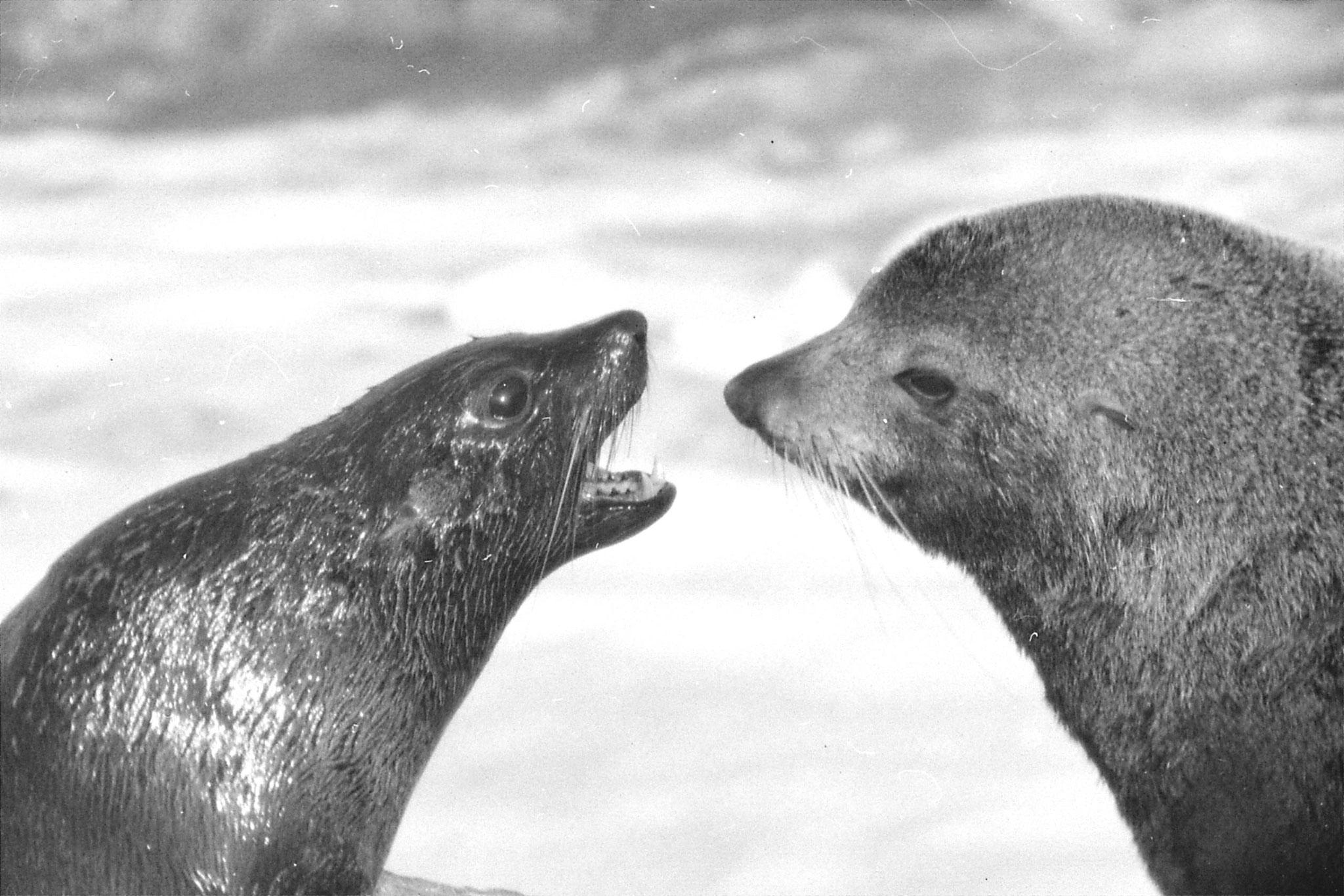 9/8/1990: 7: Kaikoura seals