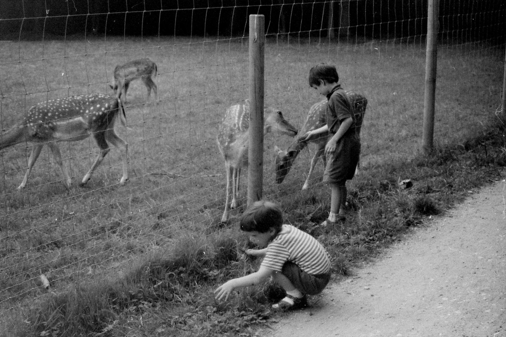 16/8/88: 27: Bonn Forest Deer Park