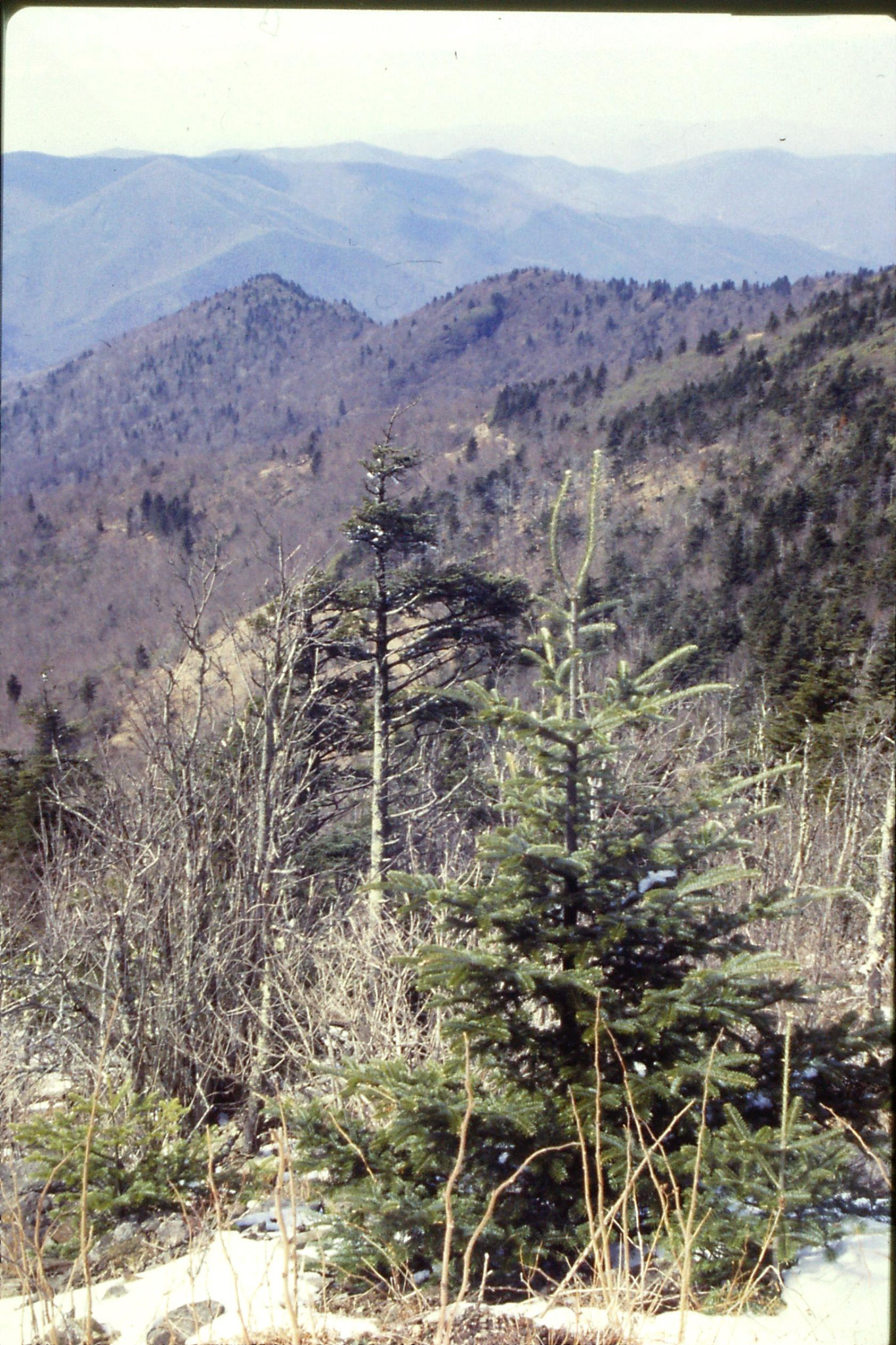 16/3/1991: 20: Road to Mt Mitchell N.C. looking NE towards Black Mountains