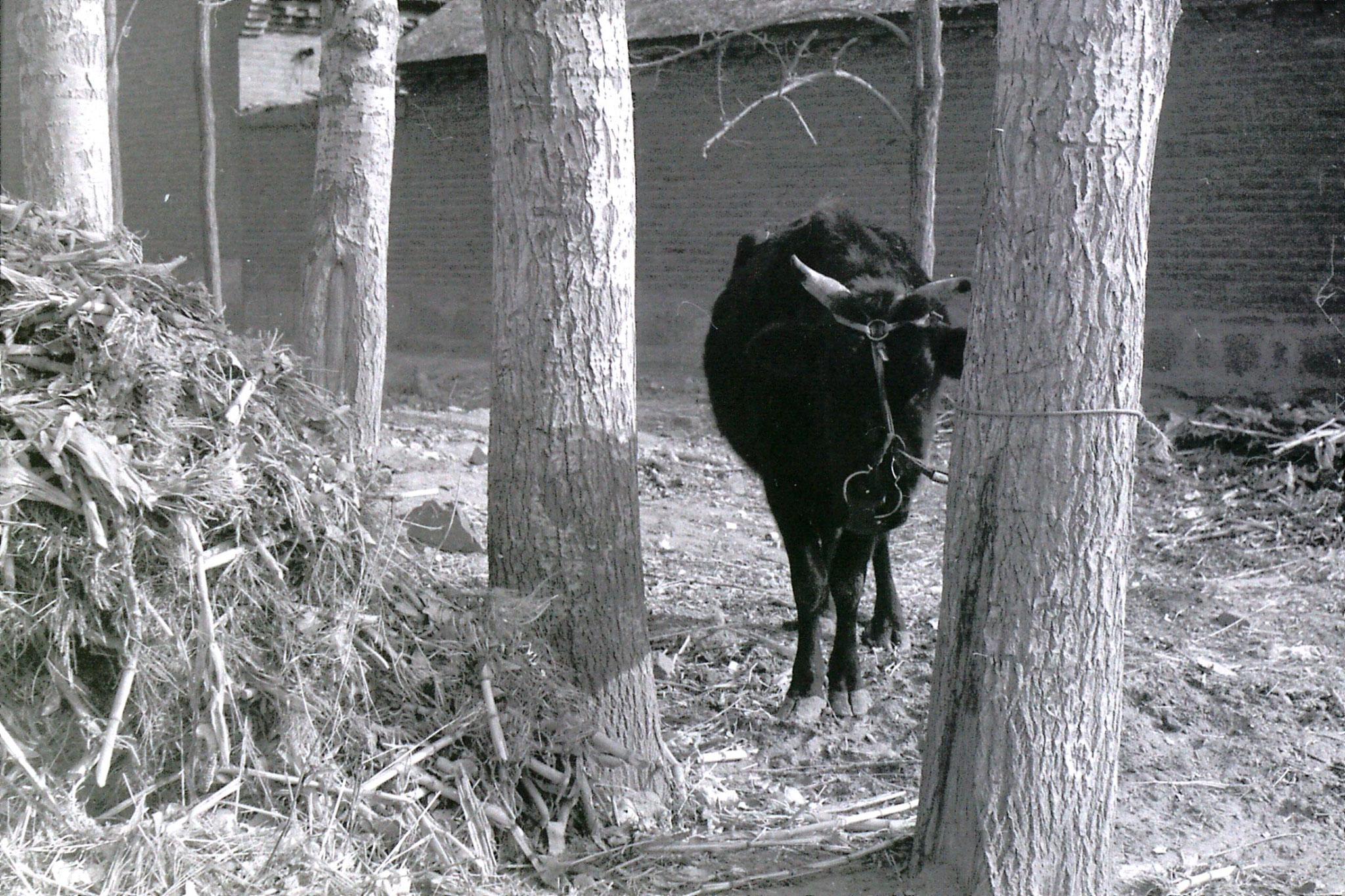 15/2/1989: 39:  Liu Bo's village